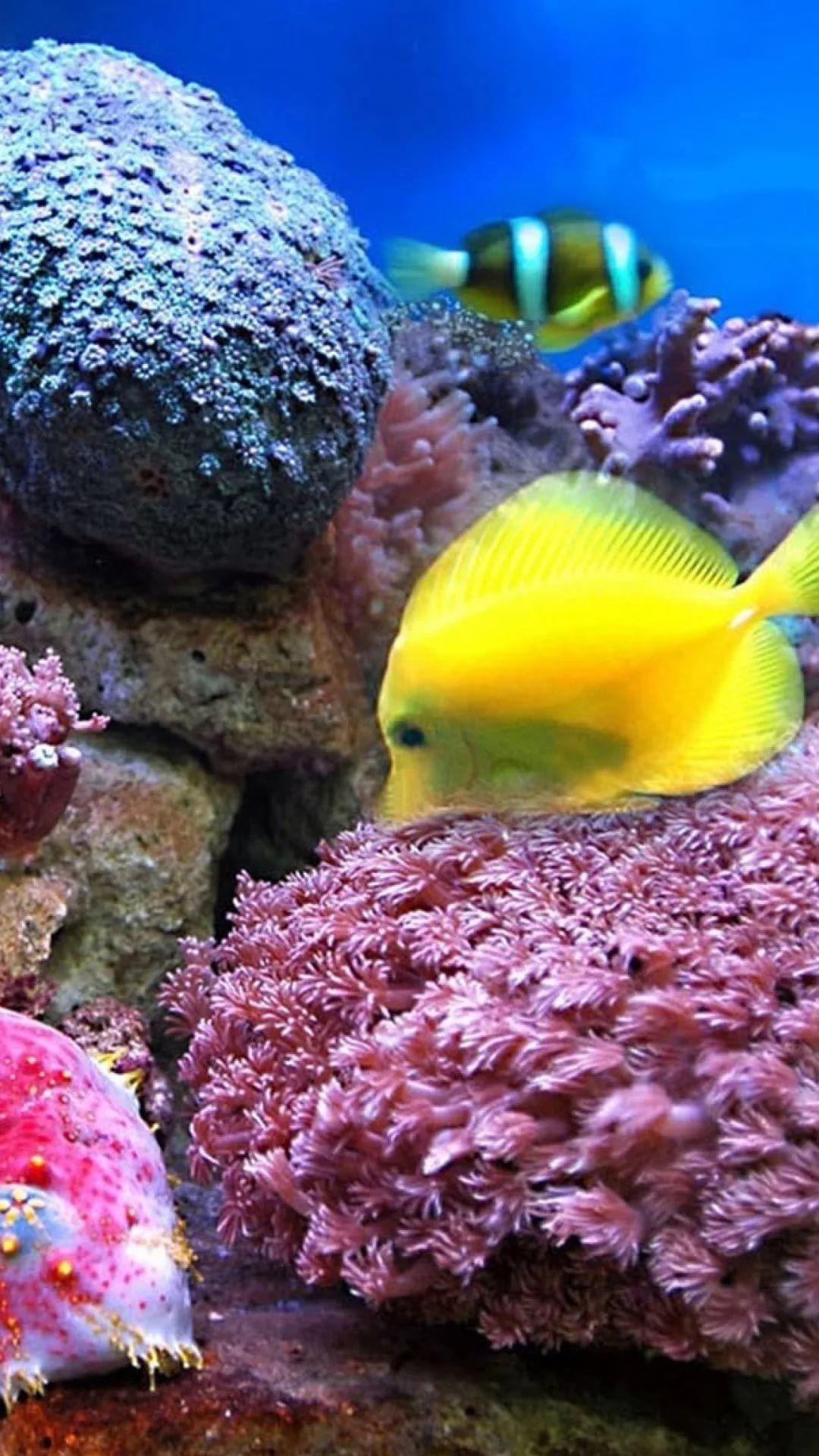 Free Tropical Fish Samsung s8 wallpaper