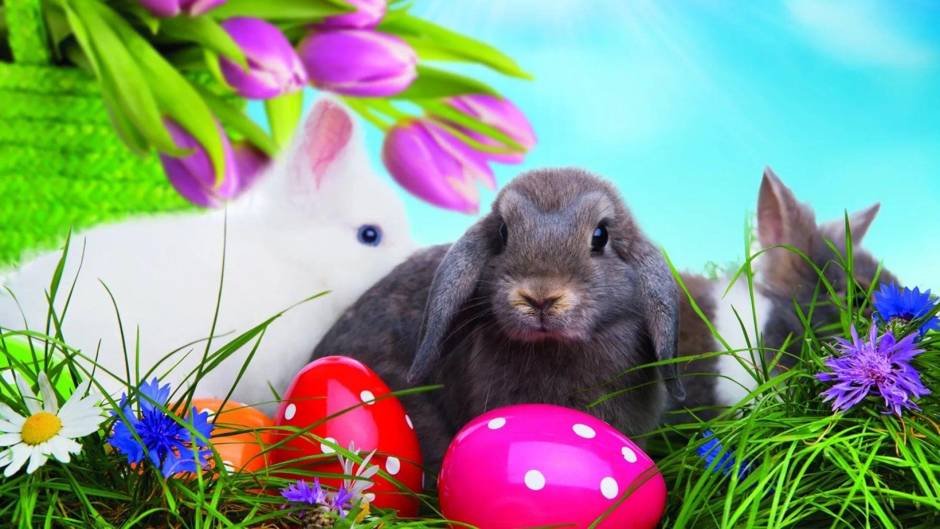 Happy Easter beautiful wallpaper