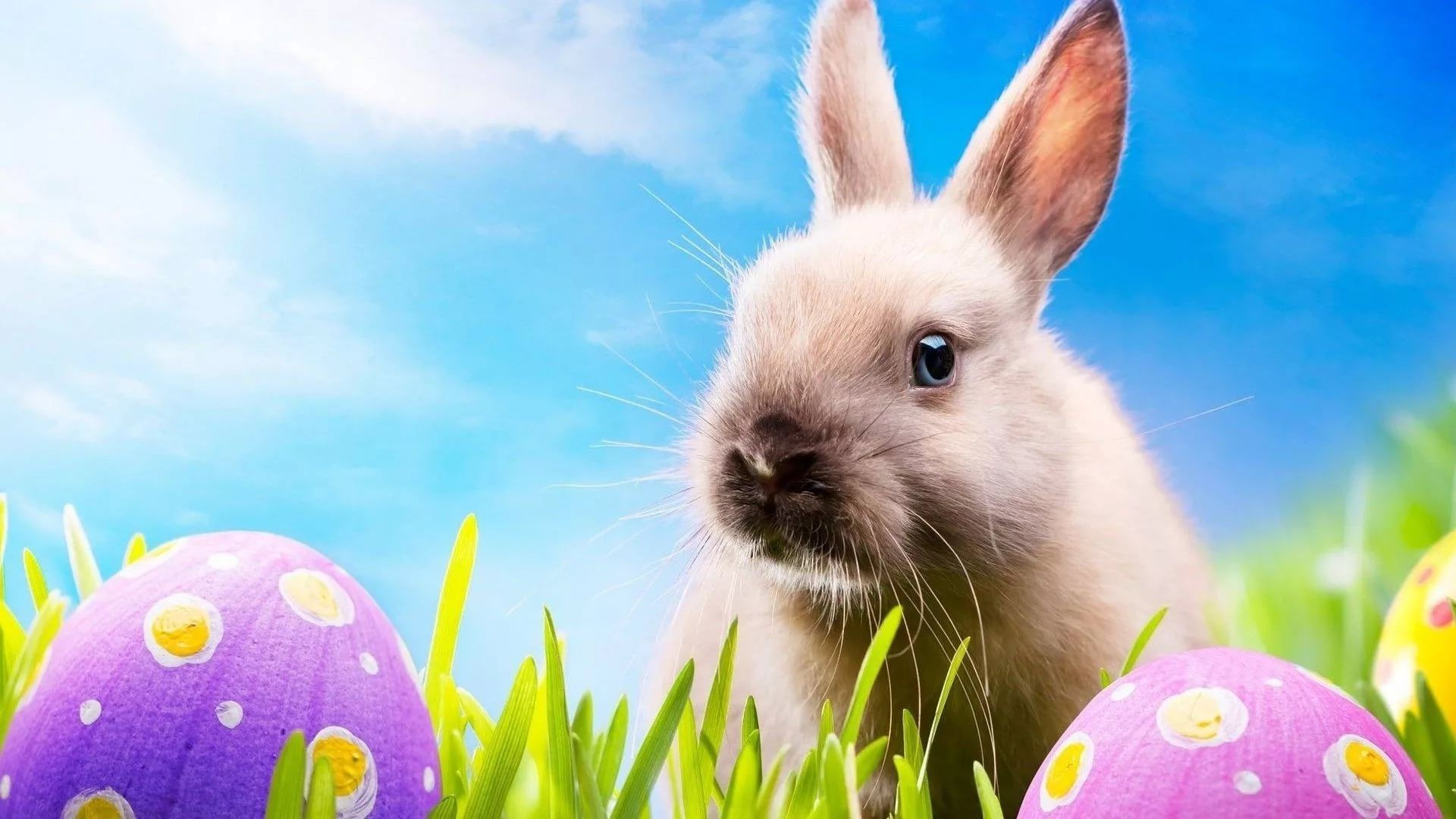 Happy Easter wallpaper image