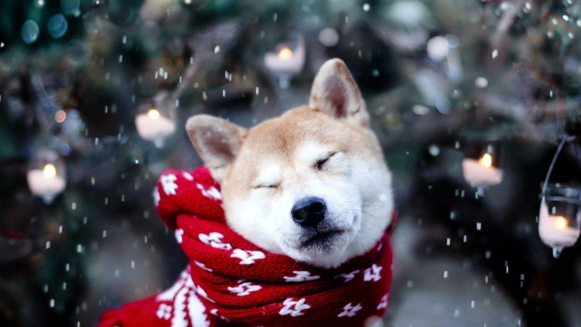 Happy Winter Pic