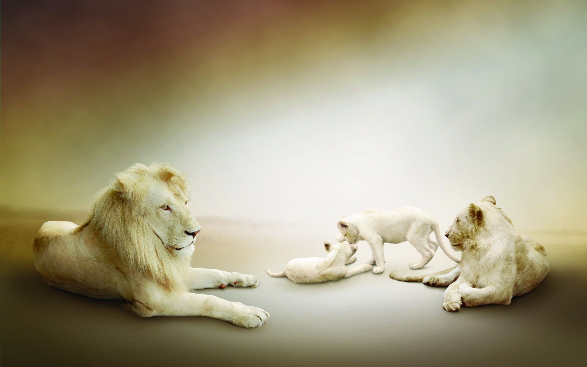 White Lion Animal Picture
