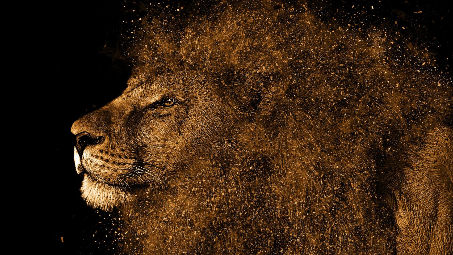 Lion Art Picture