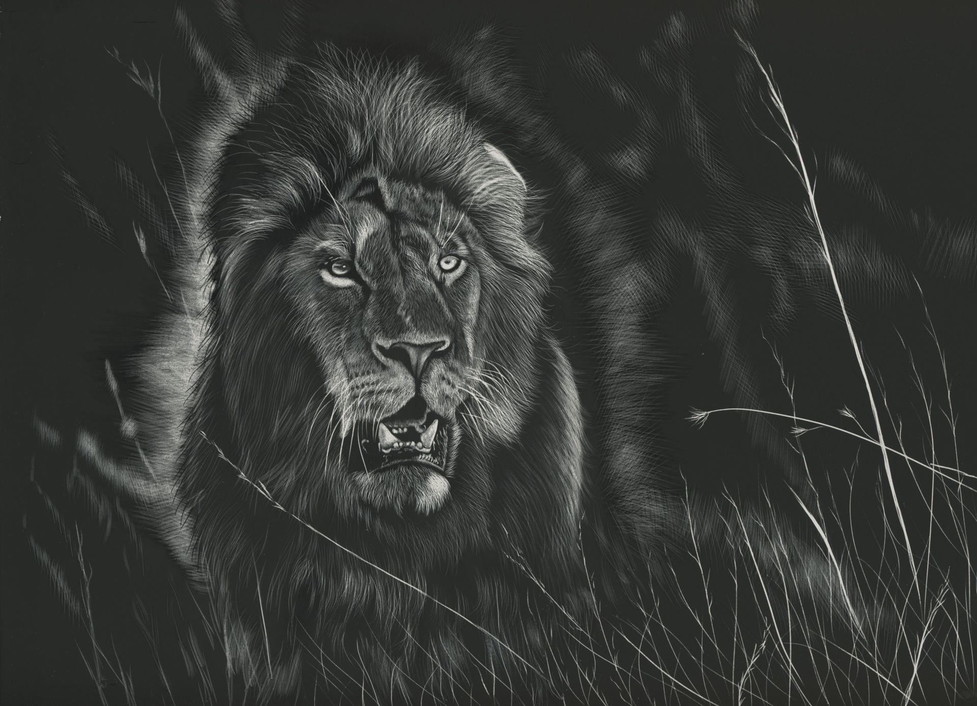 Lion Black And White Animal laptop wallpaper