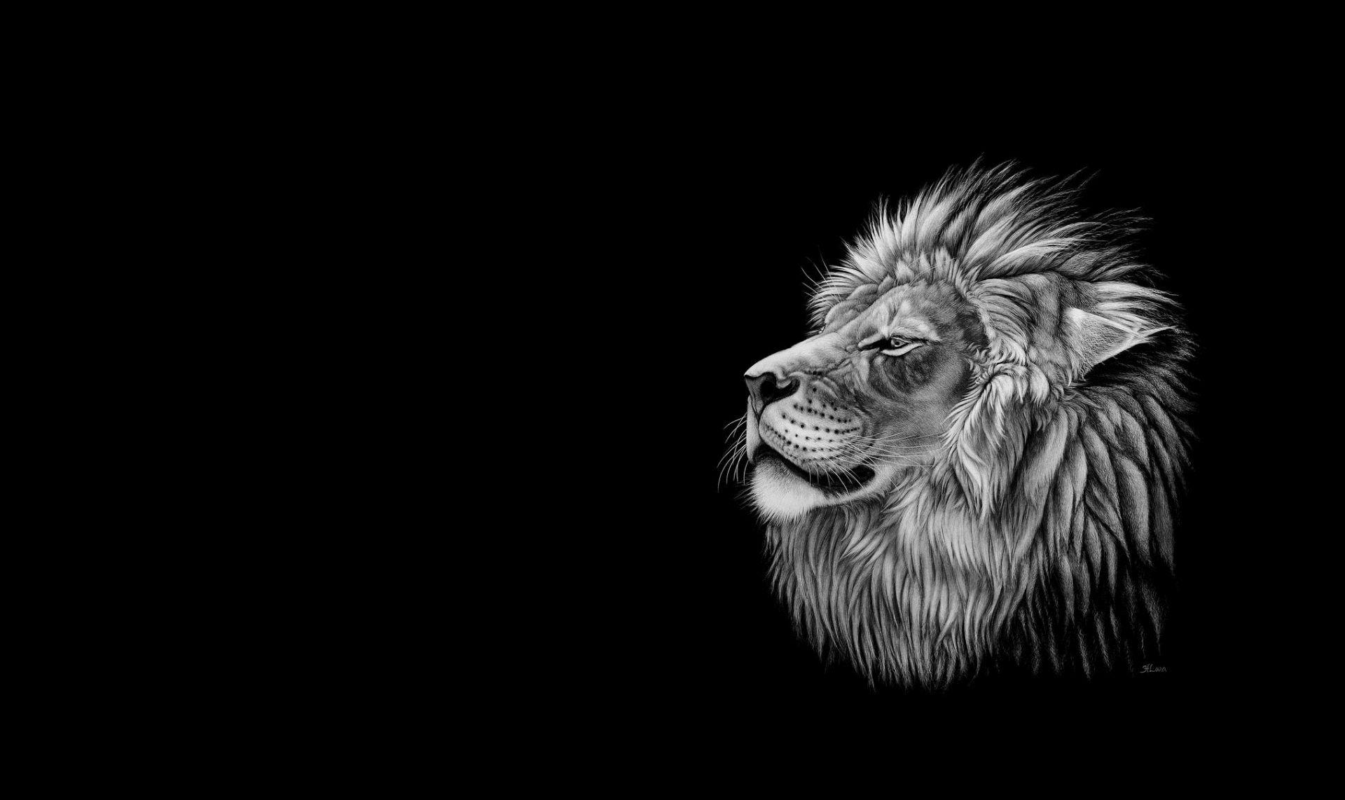 Lion Black And White Animal Good Wallpaper