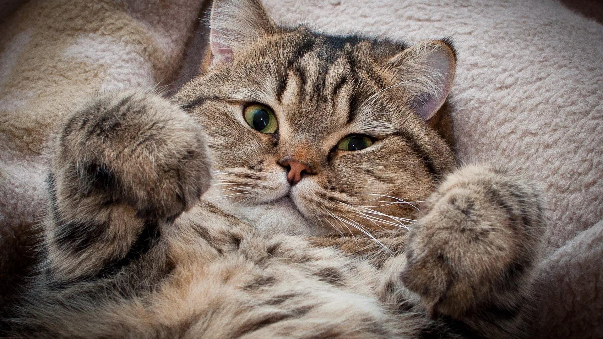 Lovely Cat free hd wallpaper
