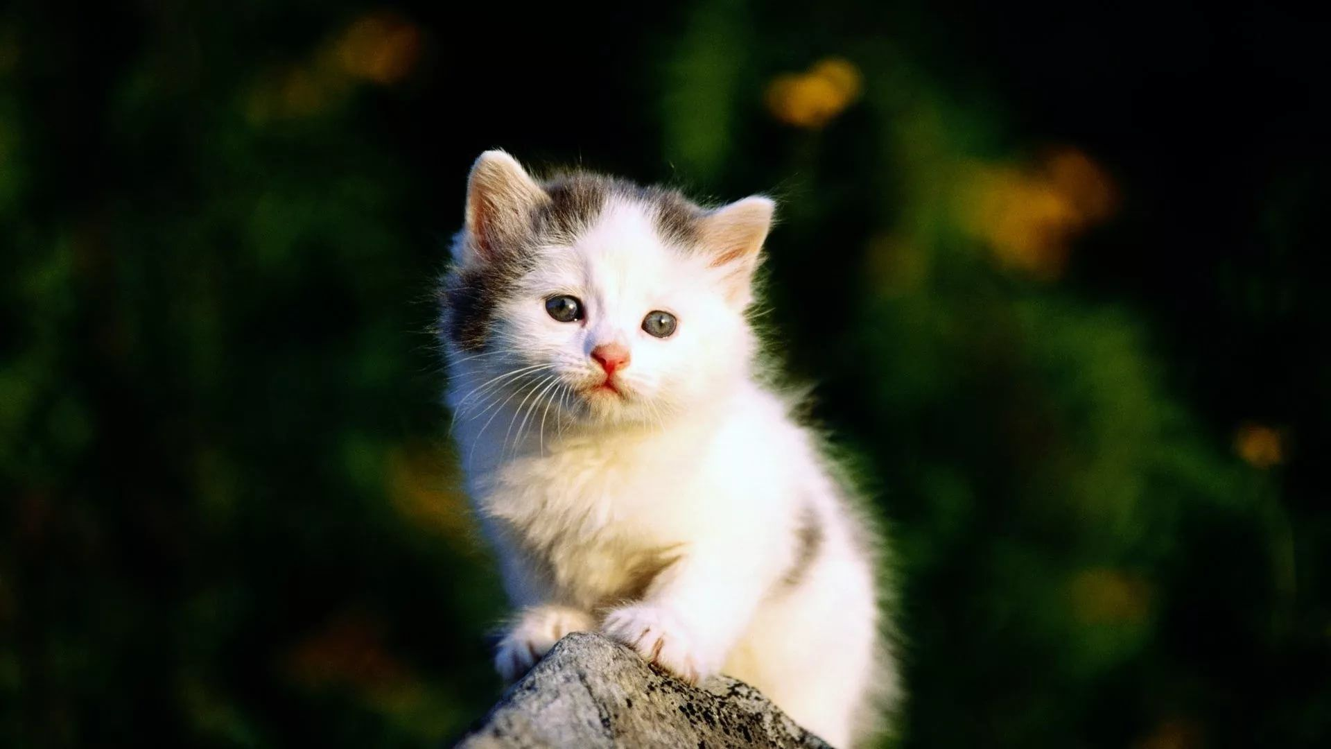 Lovely Cat Wallpapers 40 Images Wallpaperboat