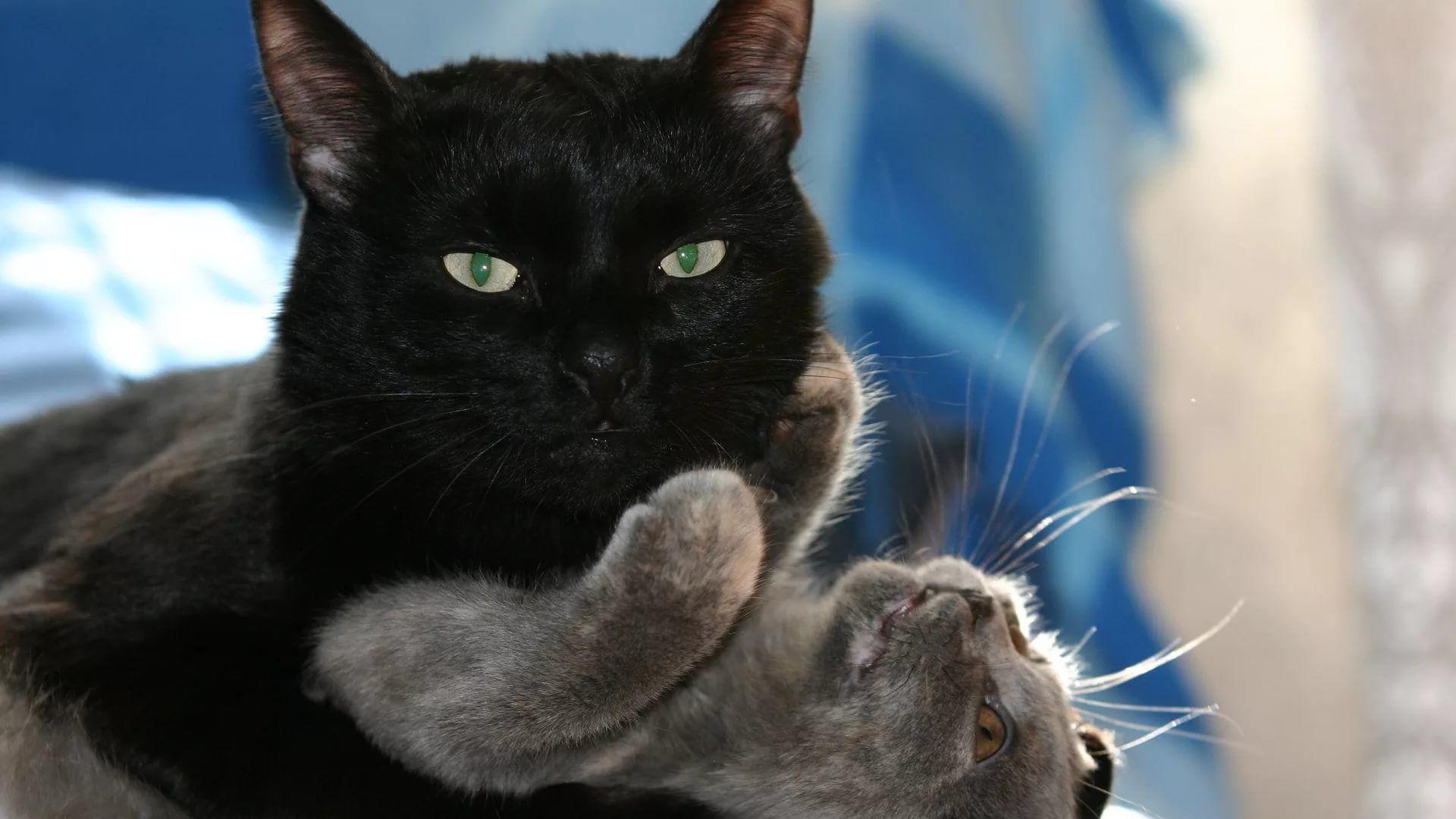 Lovely Cat HD Desktop Wallpaper