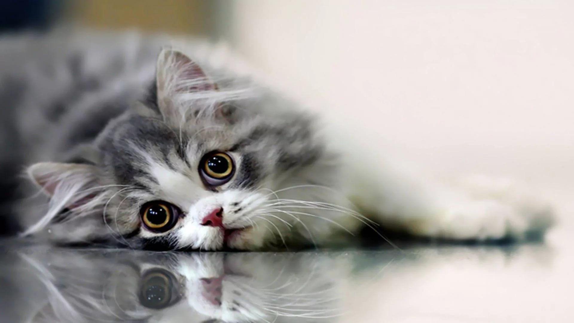 Lovely Cat Good Wallpaper