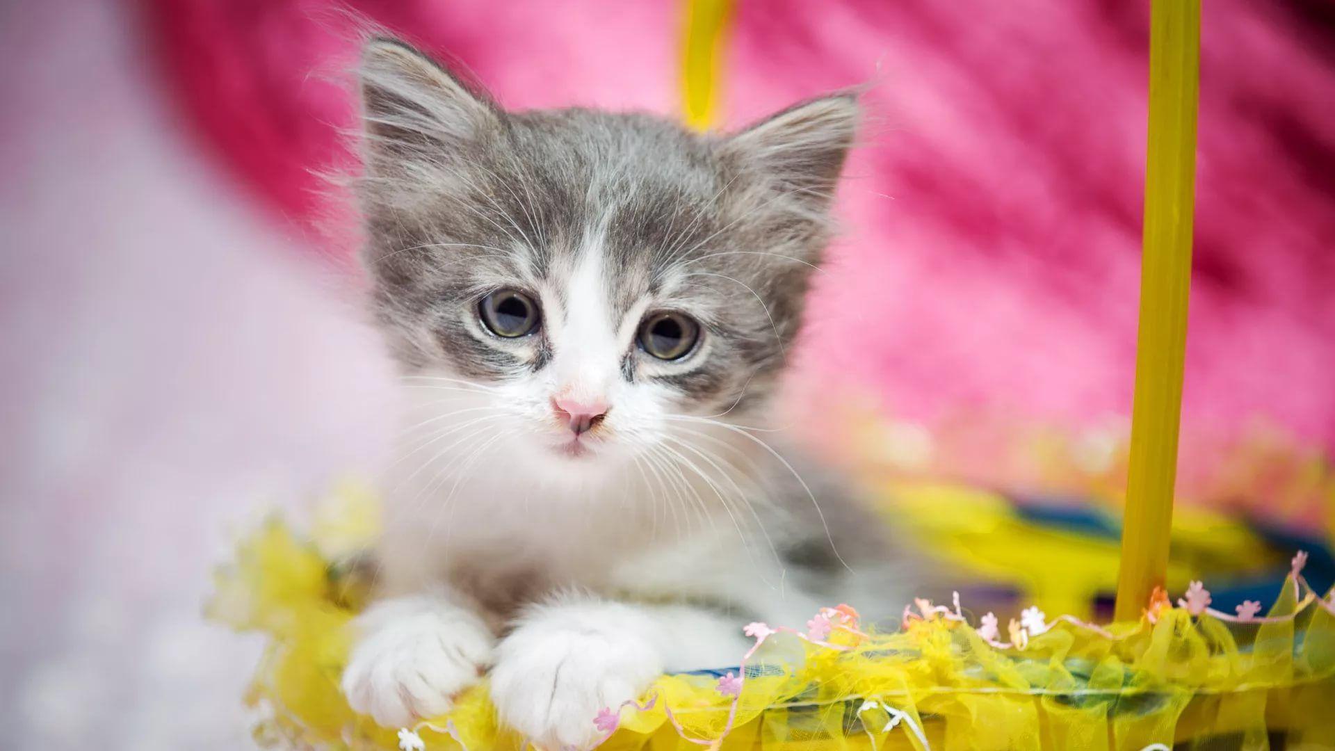 Lovely Cat vertical wallpaper hd