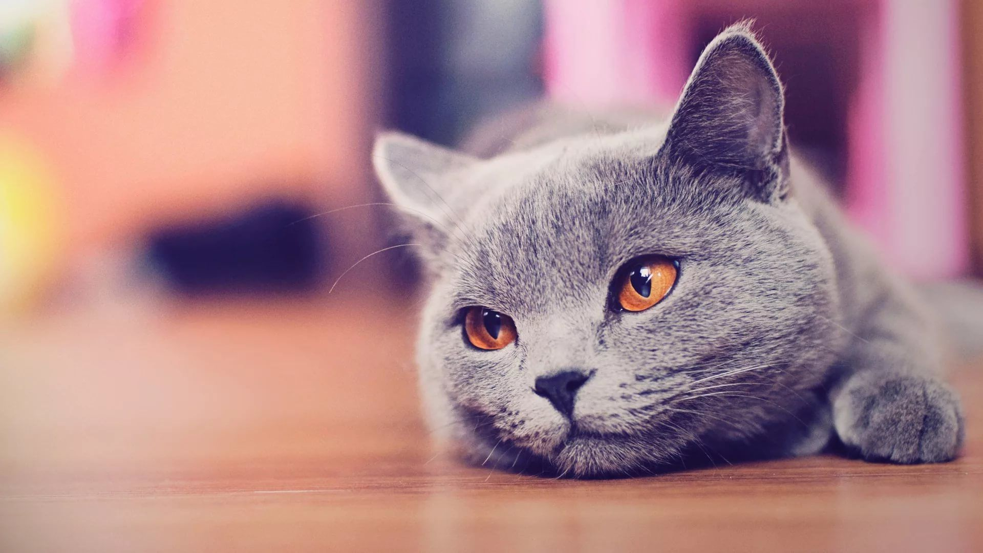Lovely Cat download free wallpapers for pc in hd