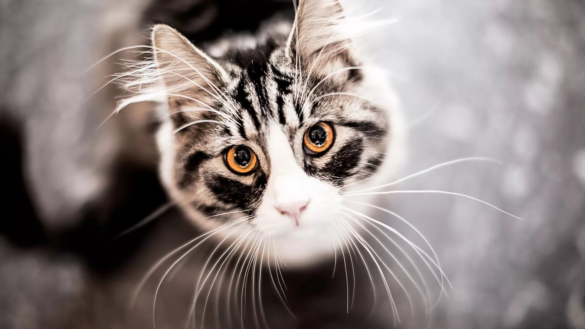 Lovely Cat beautiful wallpaper