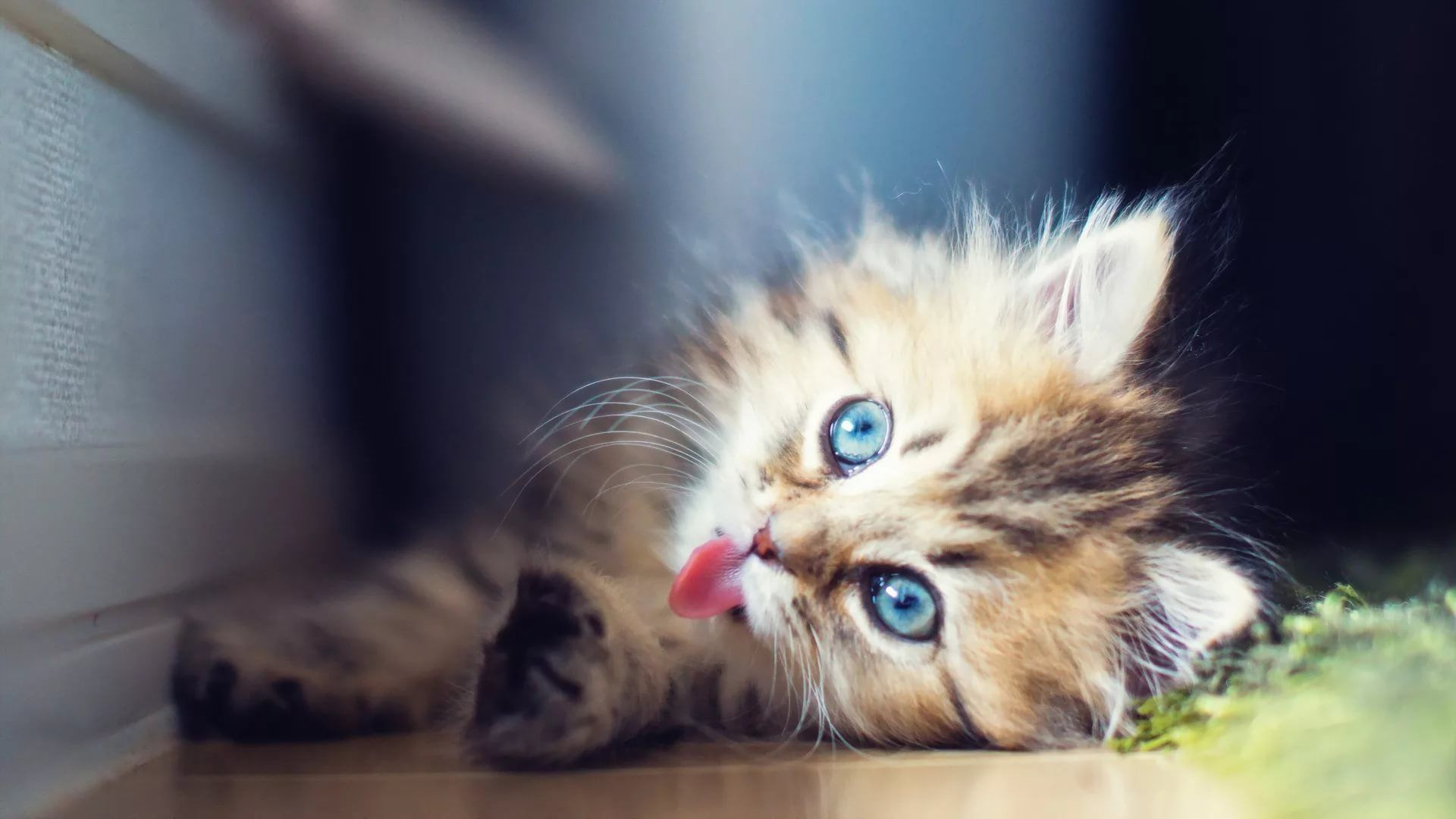 Lovely Cat download nice wallpaper