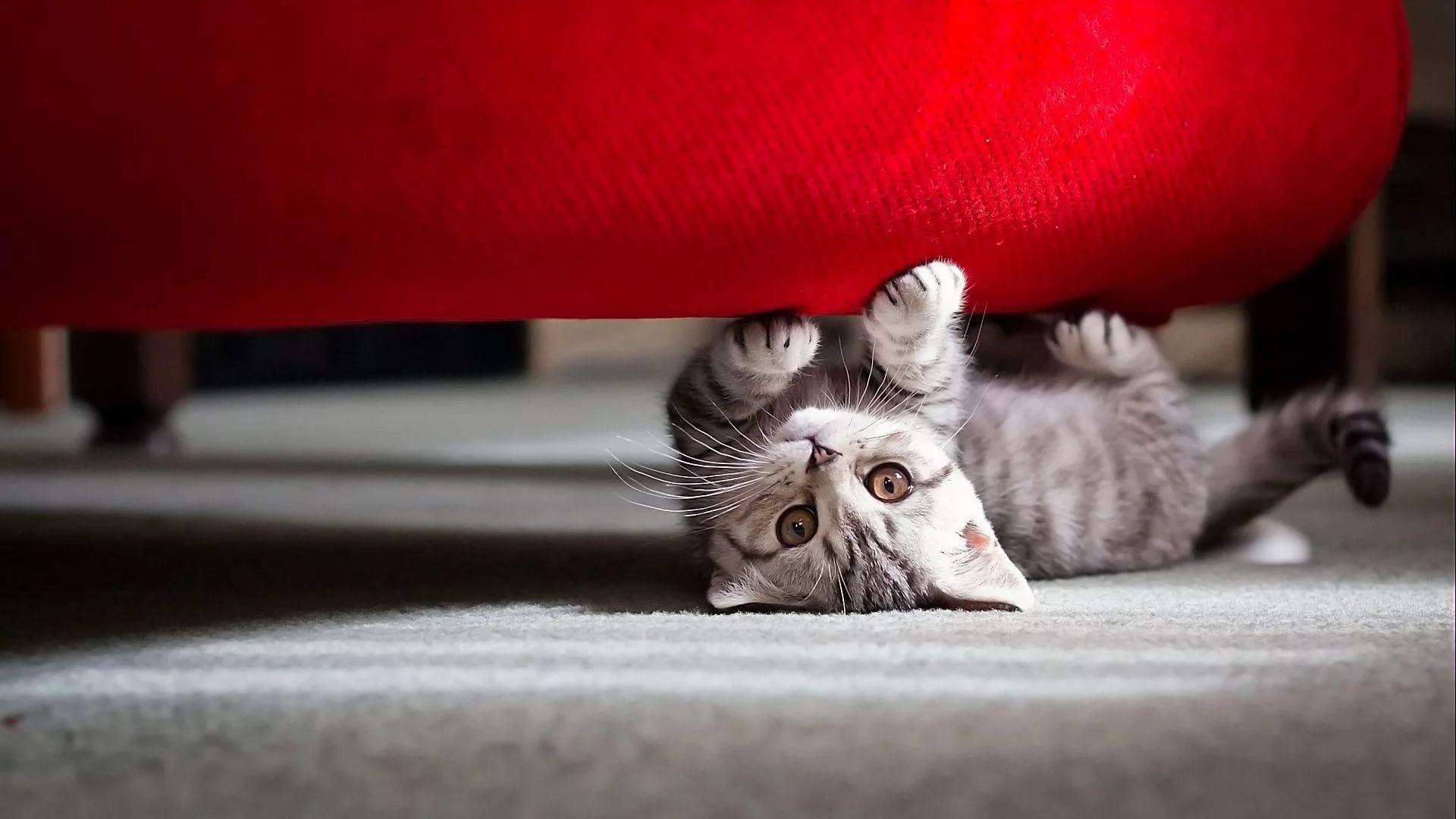 Lovely Cat full screen hd wallpaper