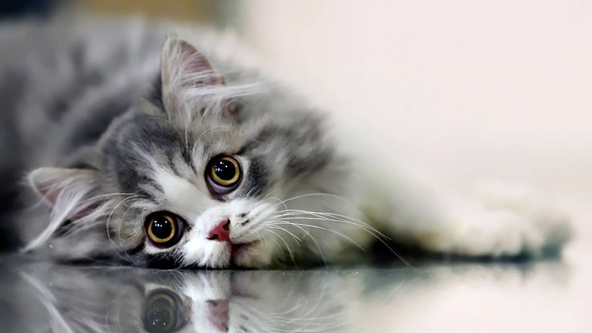 Lovely Cat Free Desktop Wallpaper