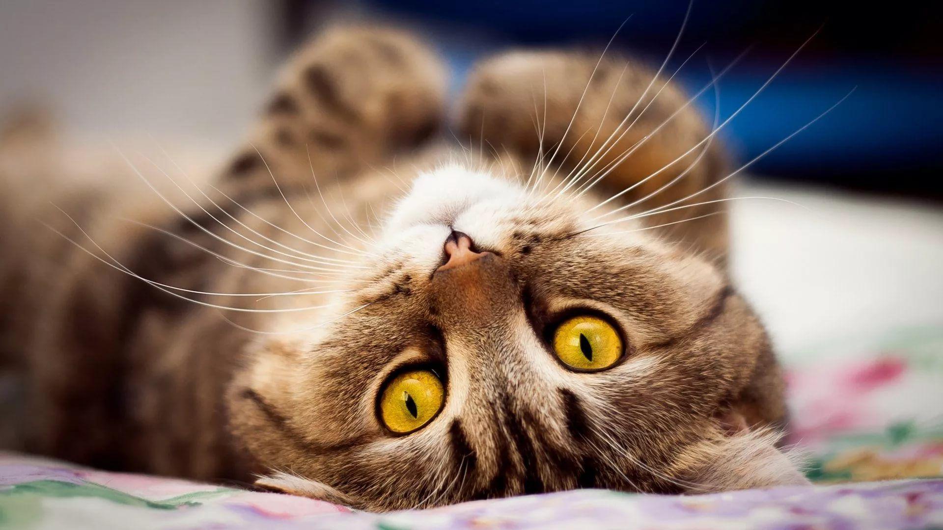 Lovely Cat wallpaper photo full hd