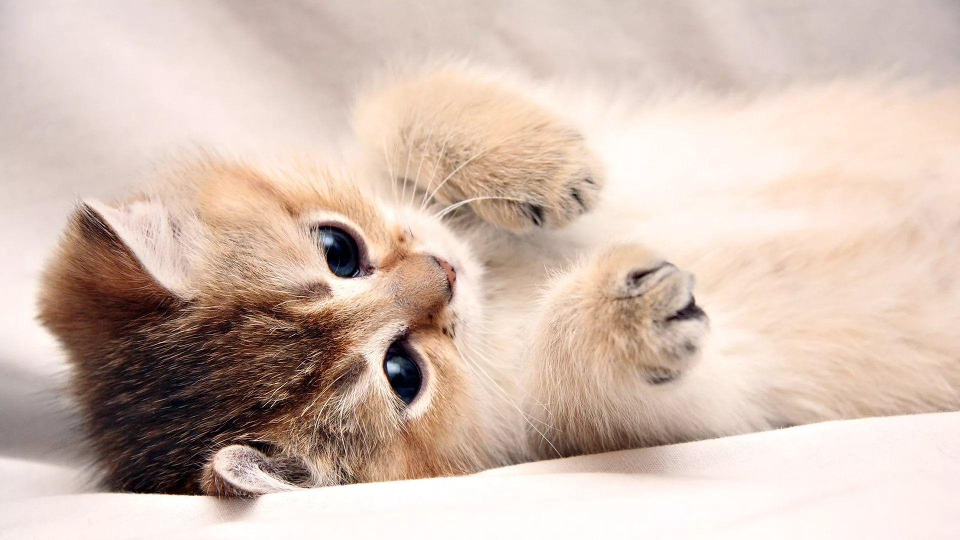 Lovely Cat Pic
