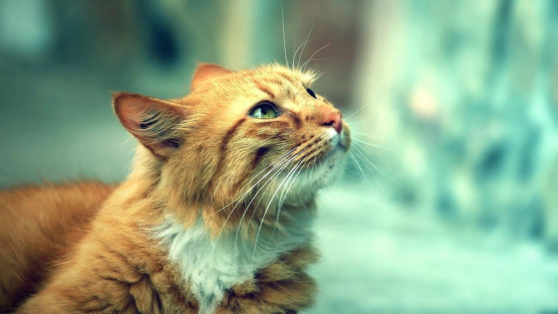 Lovely Cat Background Wallpaper