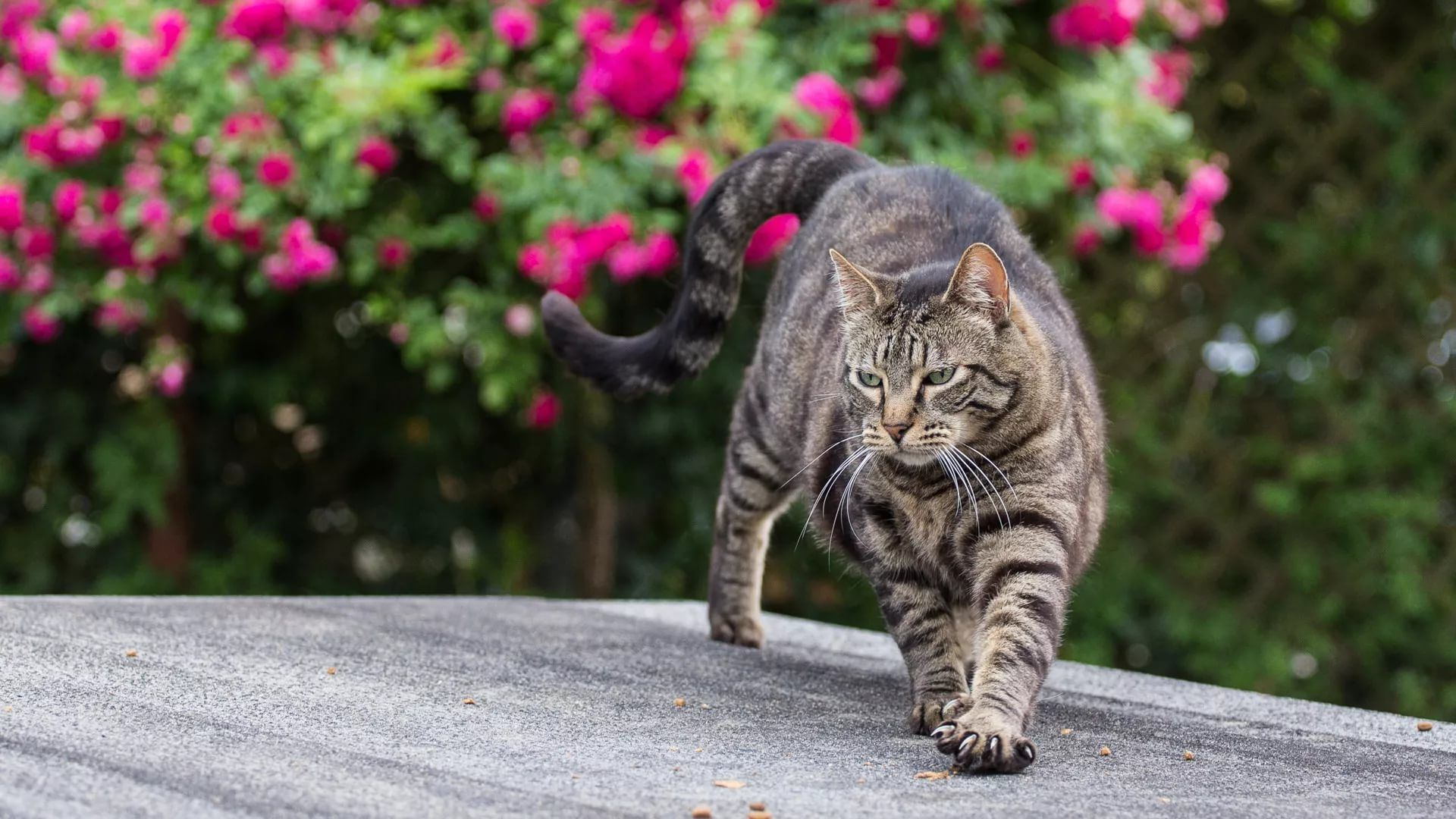 Lovely Cat download free wallpaper image search