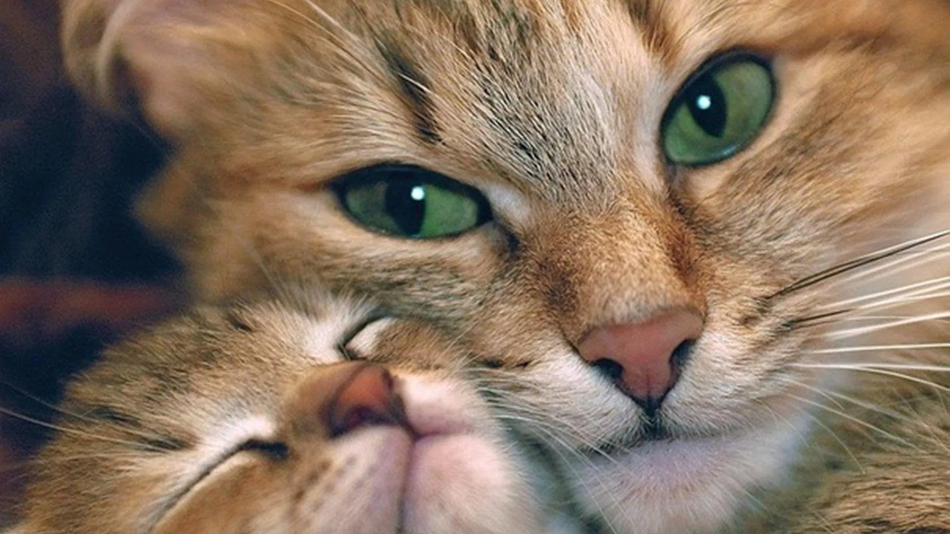 Lovely Cat 1920x1080 wallpaper