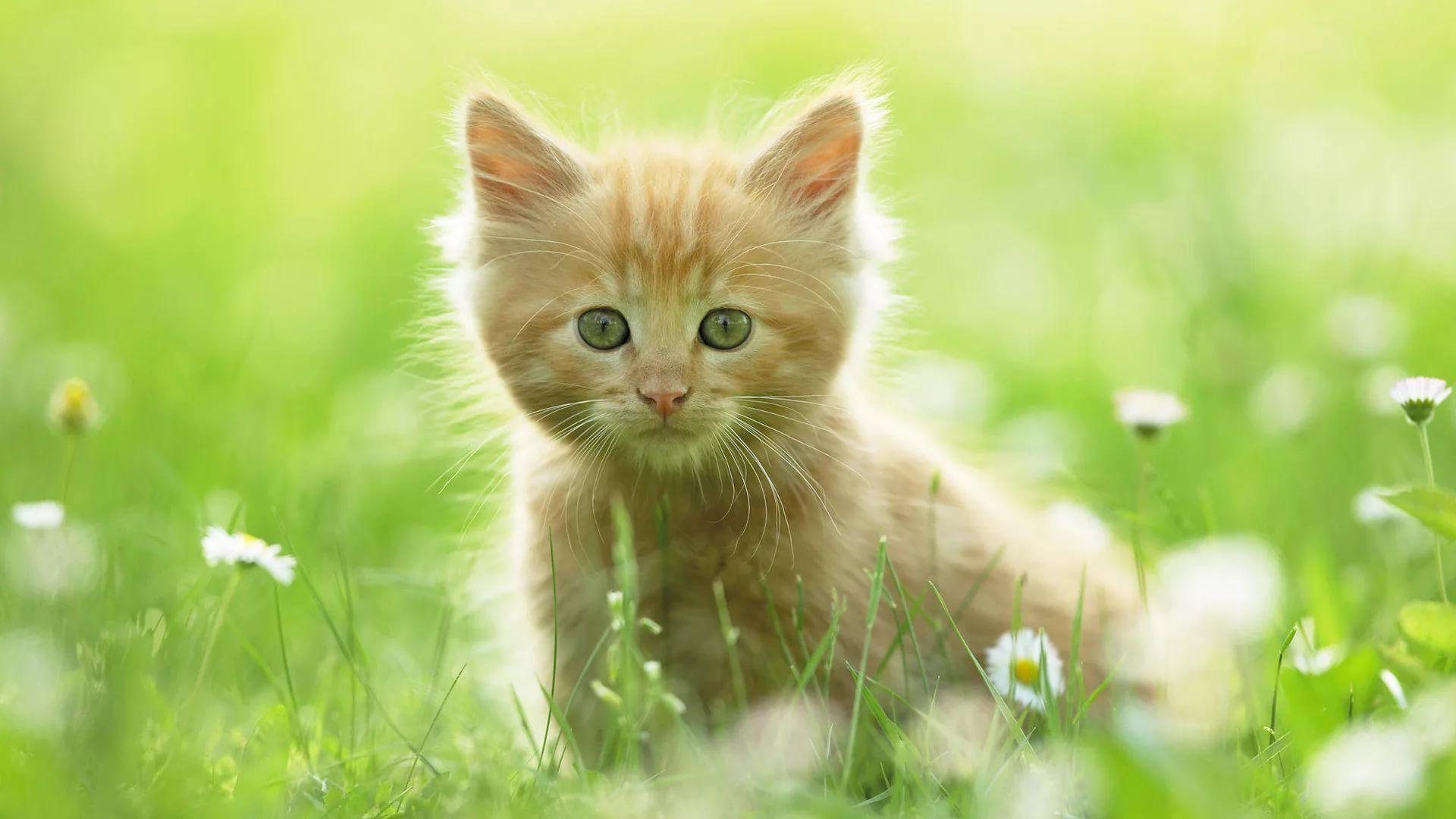 Lovely Cat wallpaper image