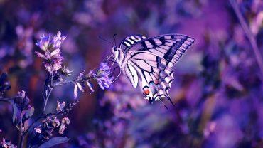 Nice Butterfly laptop wallpaper