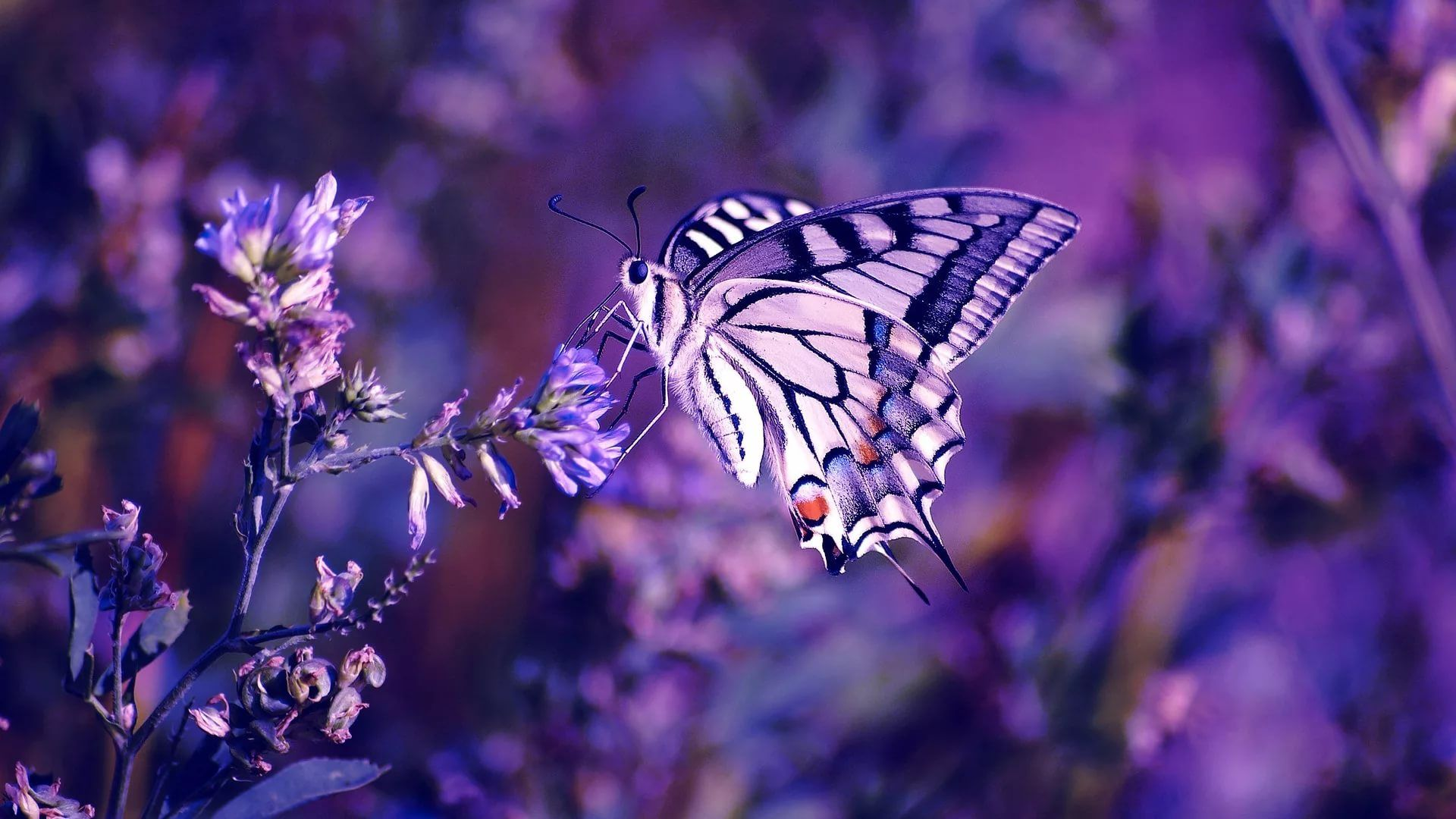 Nice Butterfly laptop wallpaper