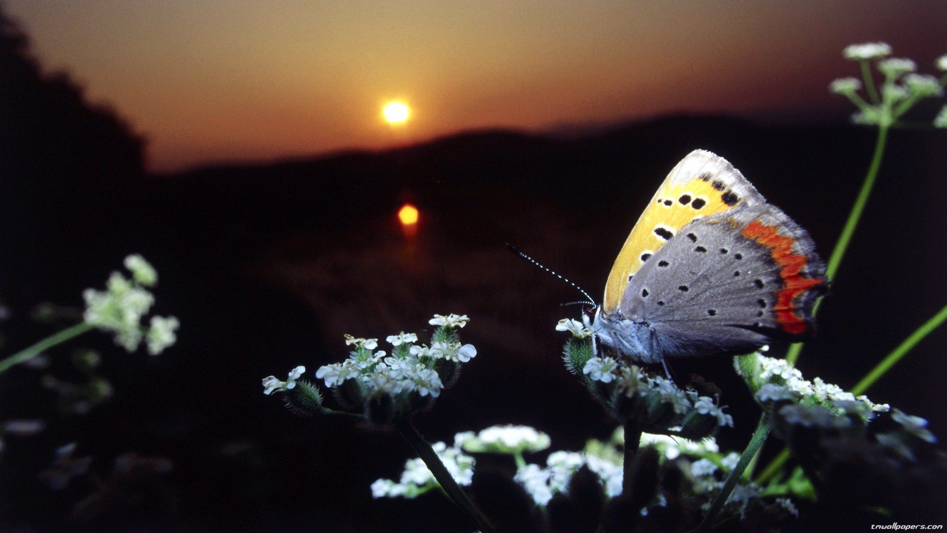 Nice Butterfly desktop wallpaper