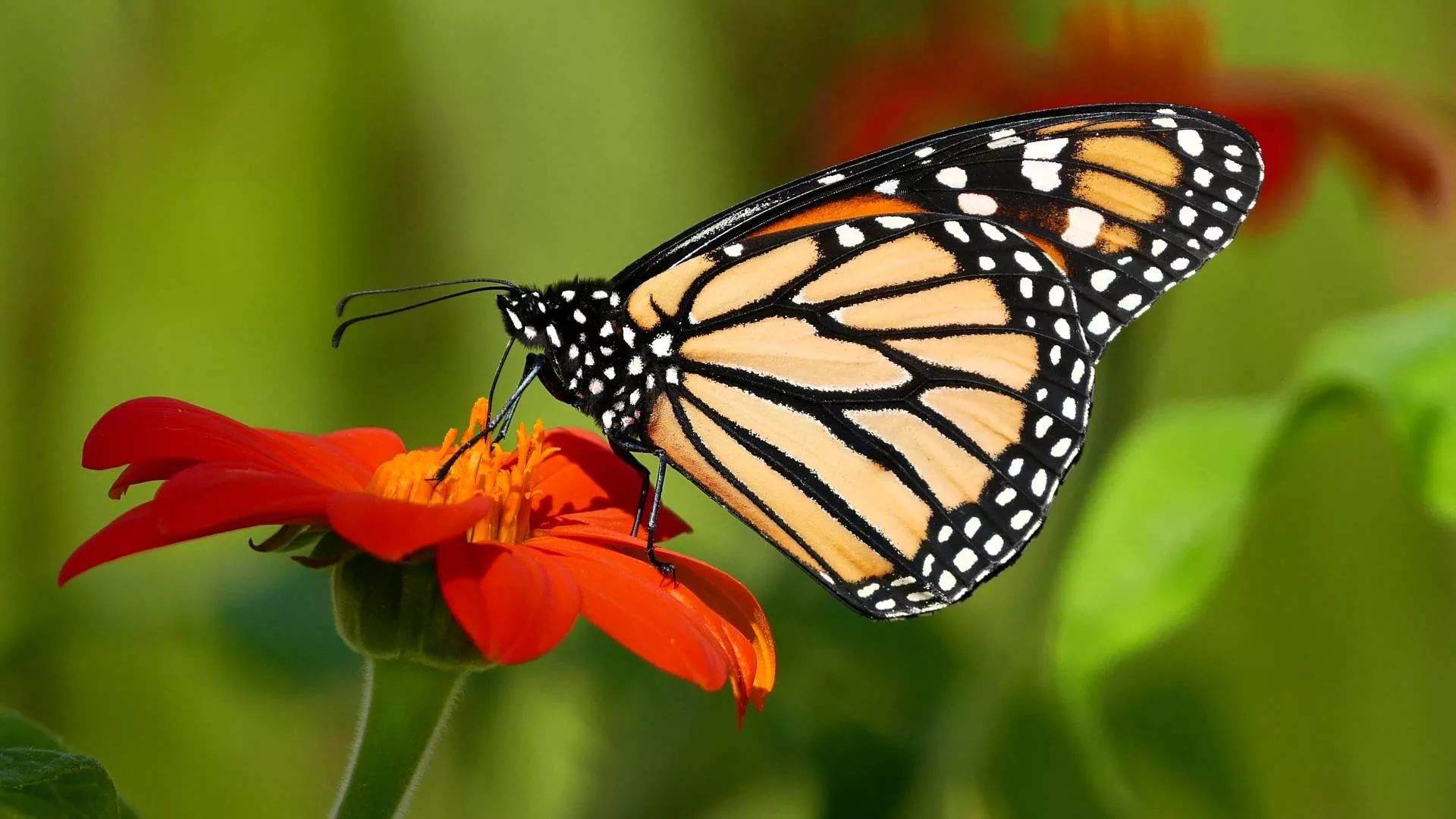 Nice Butterfly wallpaper photo hd