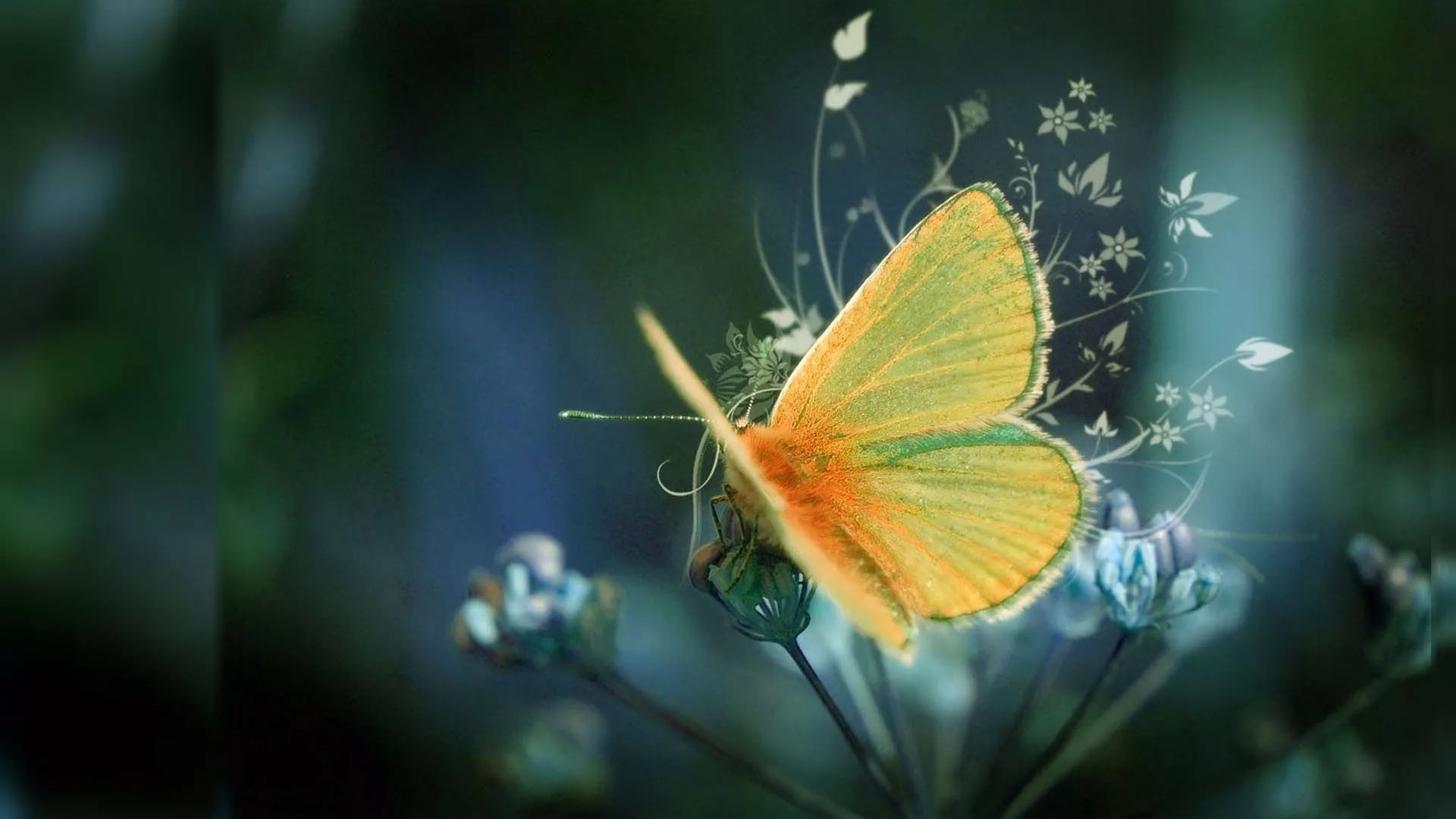 Nice Butterfly Wallpaper Theme