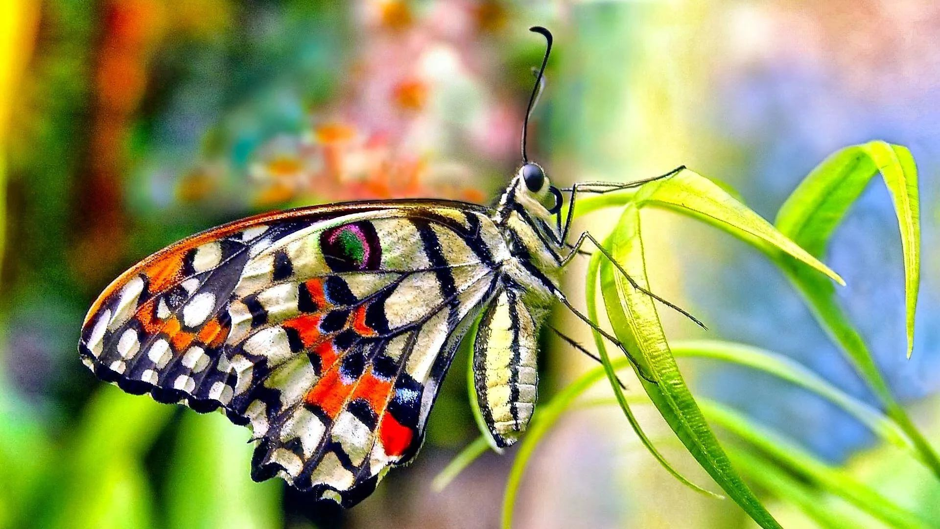 Nice Butterfly full screen hd wallpaper