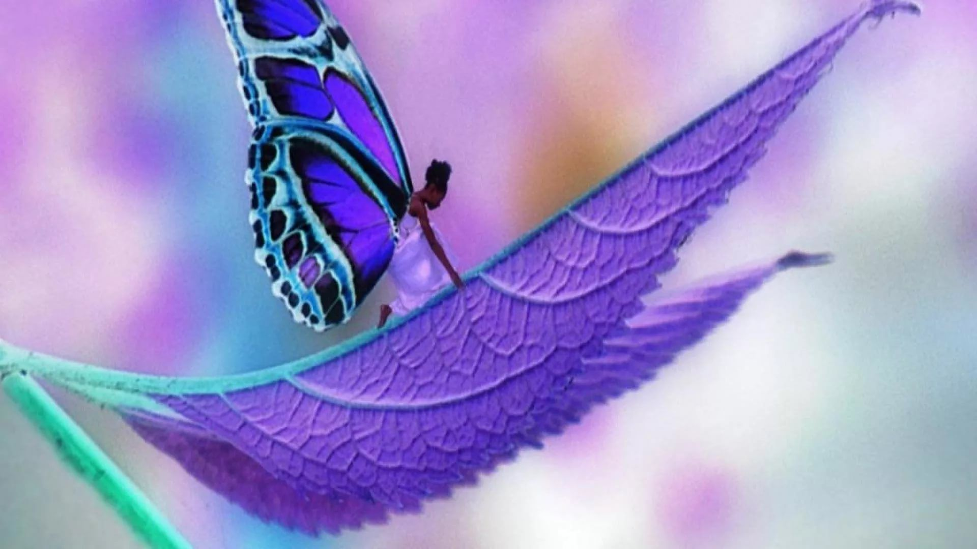 Nice Butterfly High Definition