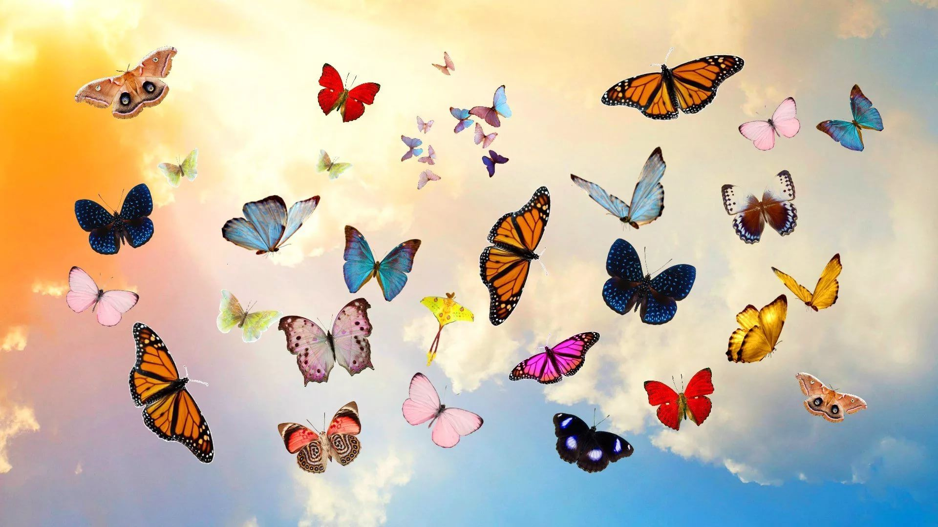 Nice Butterfly 1920x1080 wallpaper
