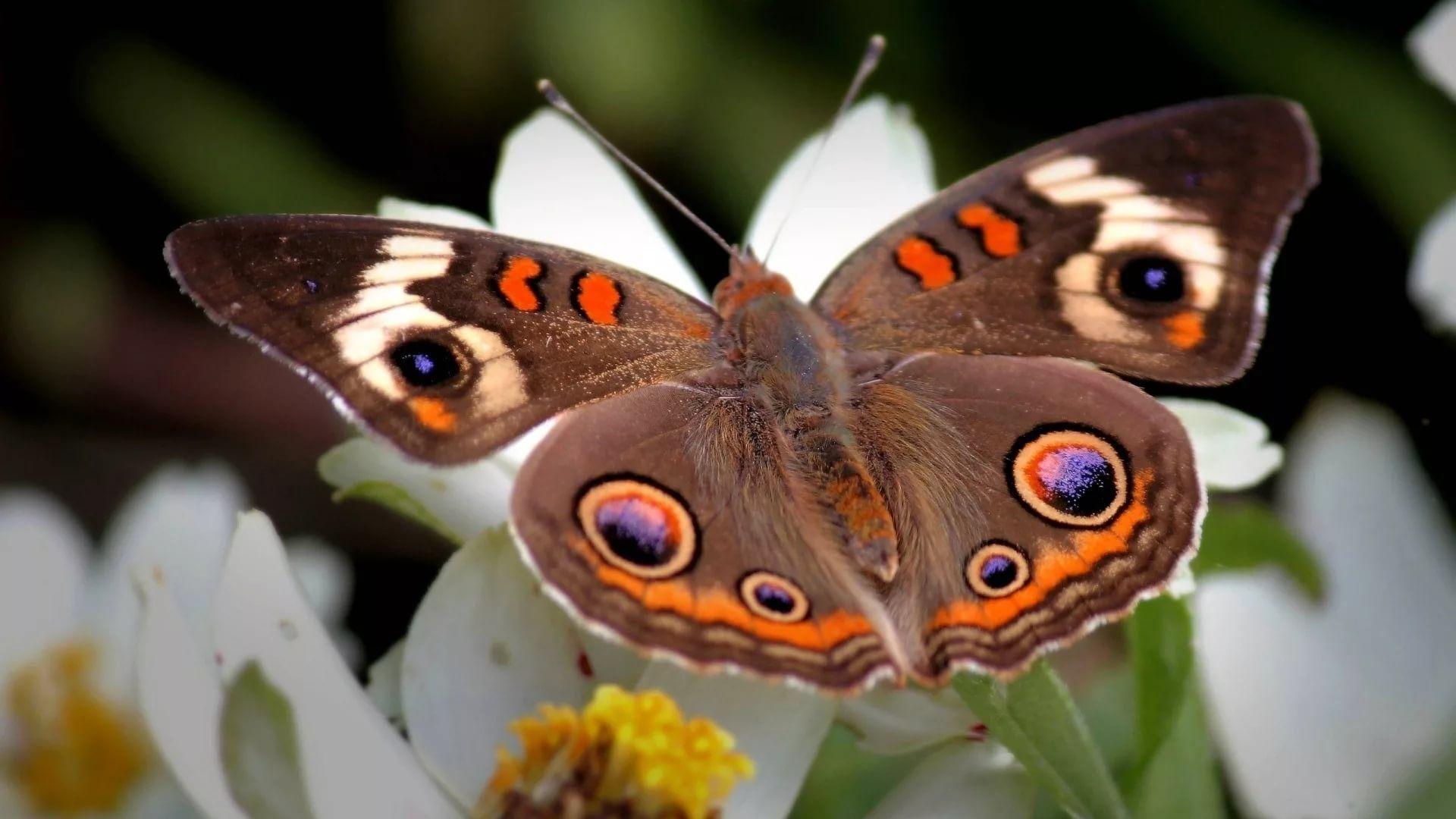 Nice Butterfly free download wallpaper