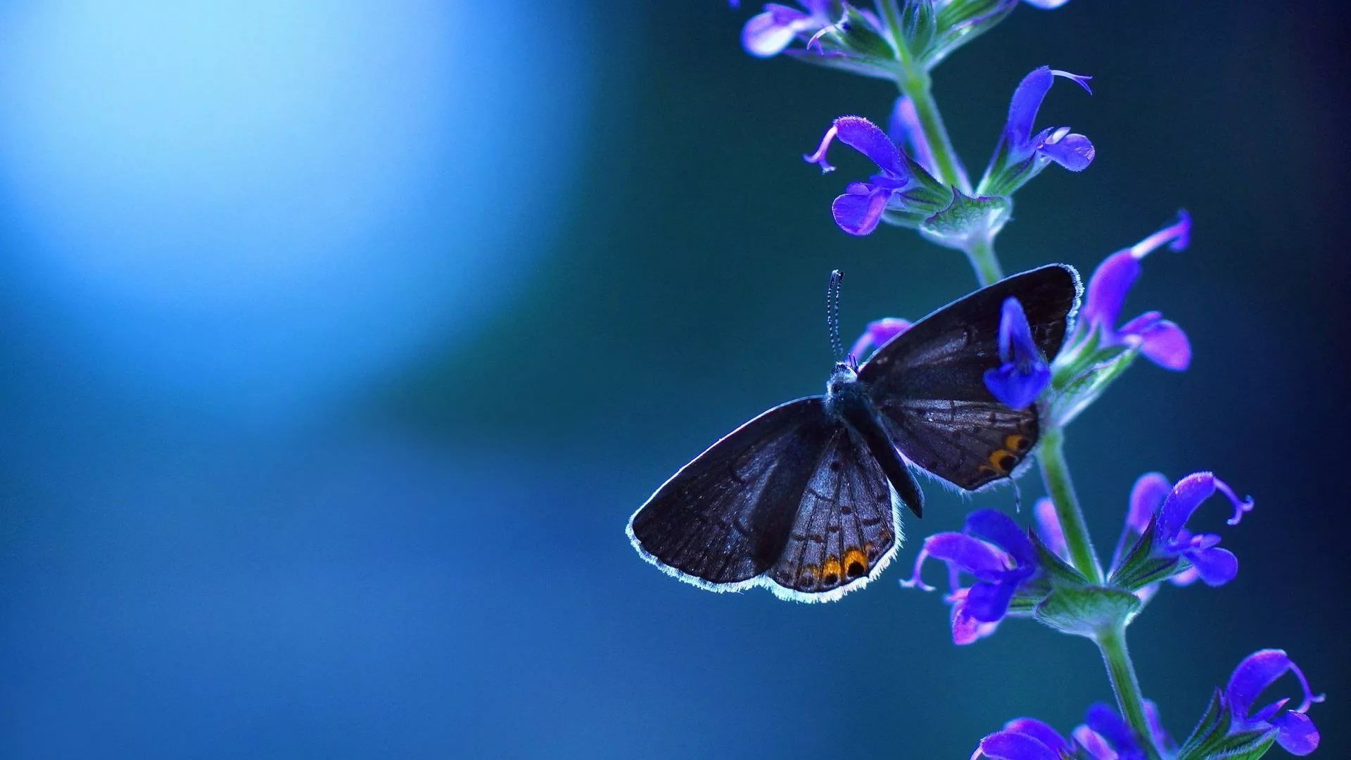 Nice Butterfly computer wallpaper