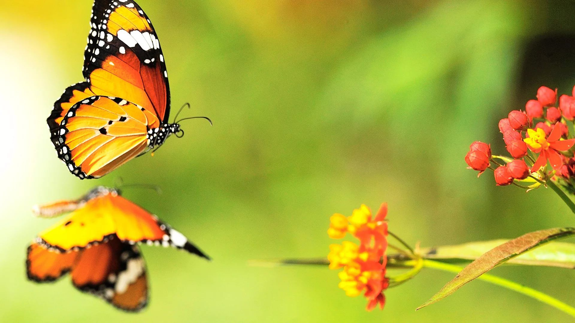 Nice Butterfly hd wallpaper download