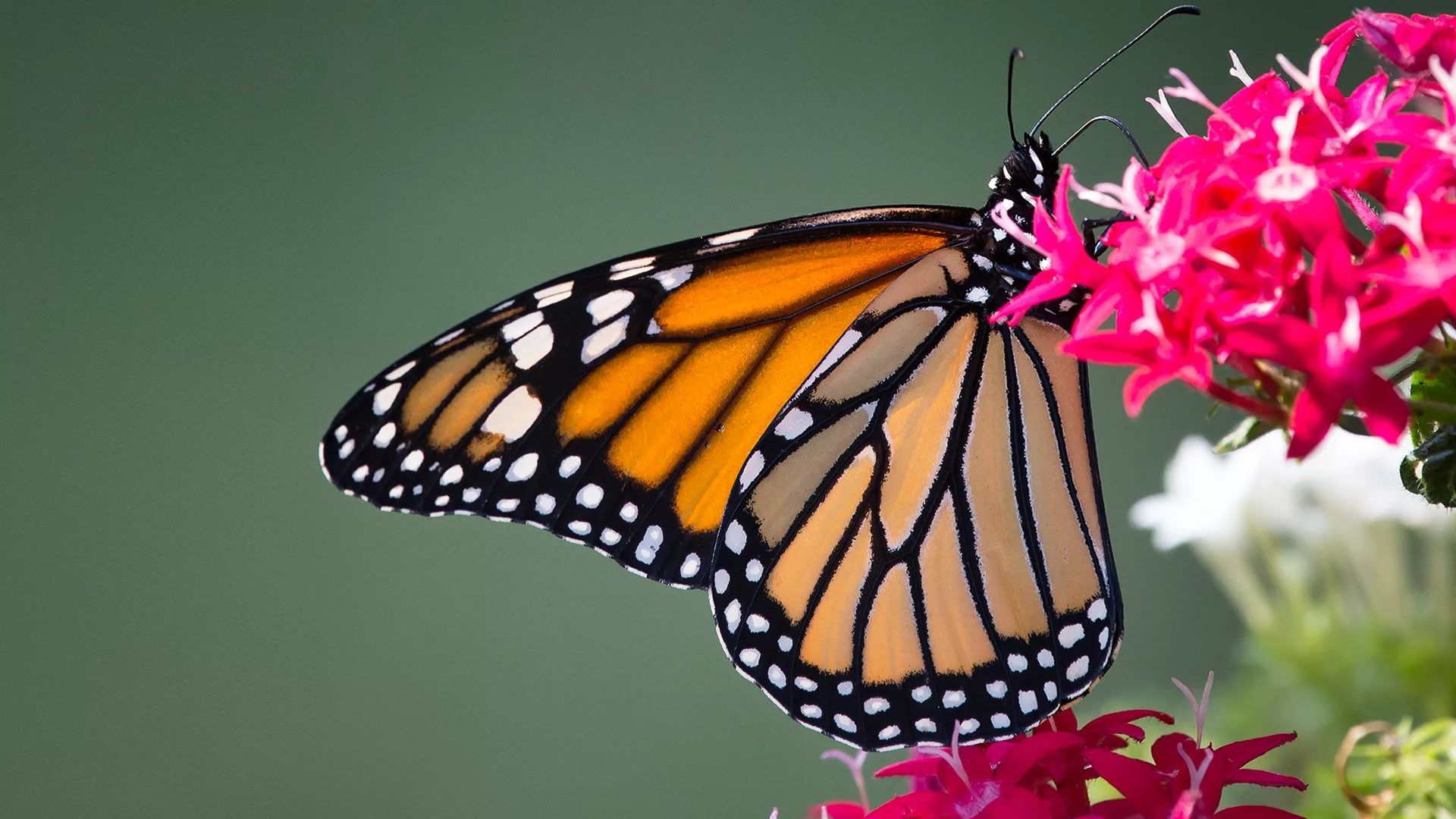 Nice Butterfly wallpaper picture hd