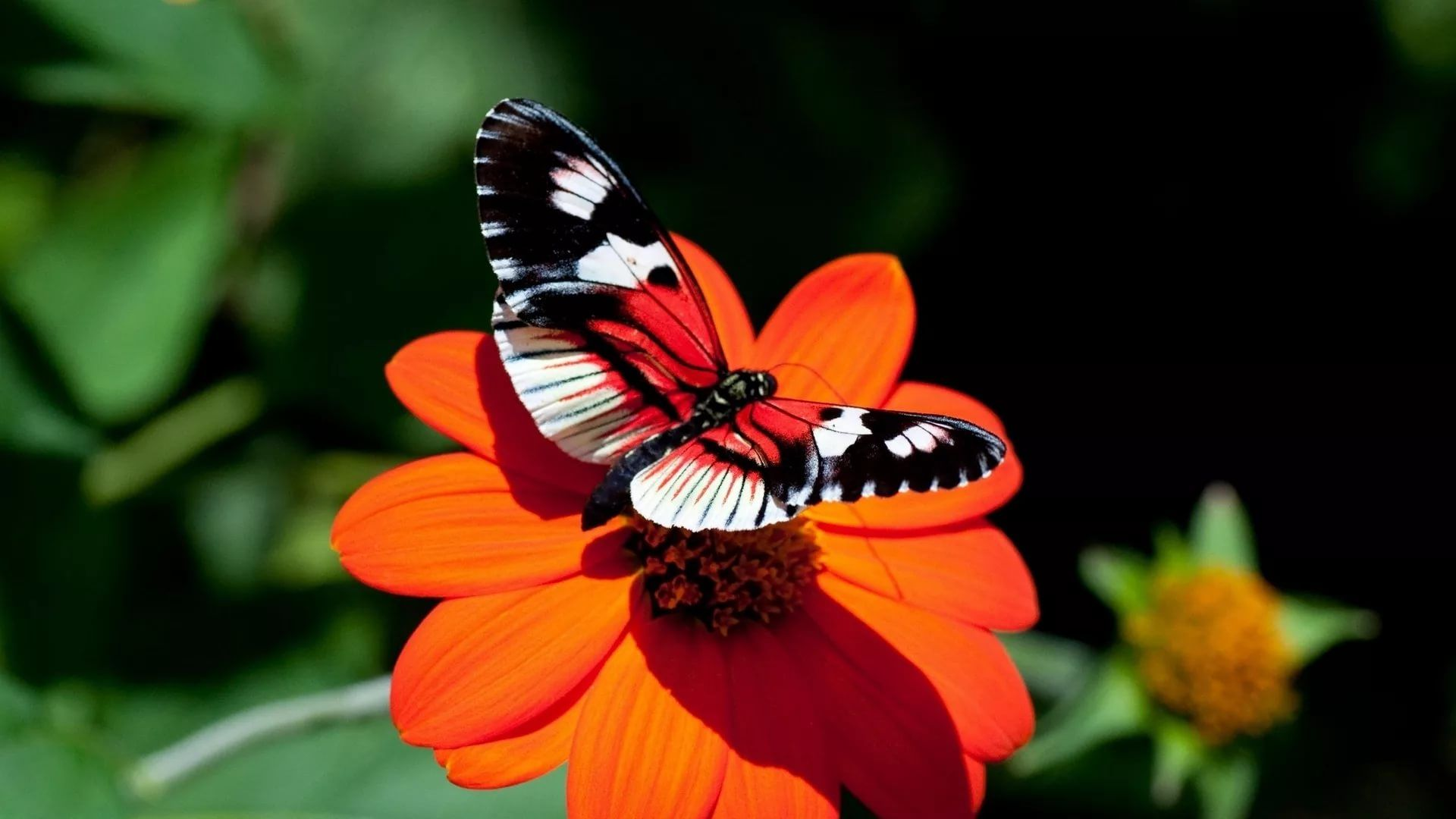 Nice Butterfly Cool Wallpaper