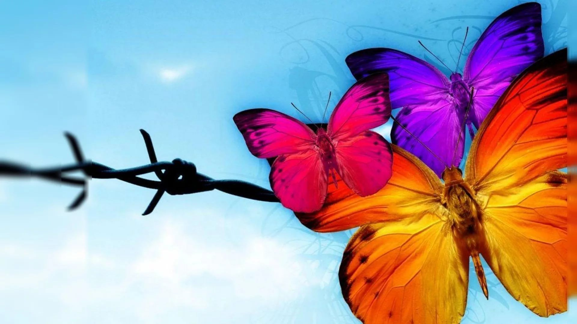Nice Butterfly Wallpaper Picture