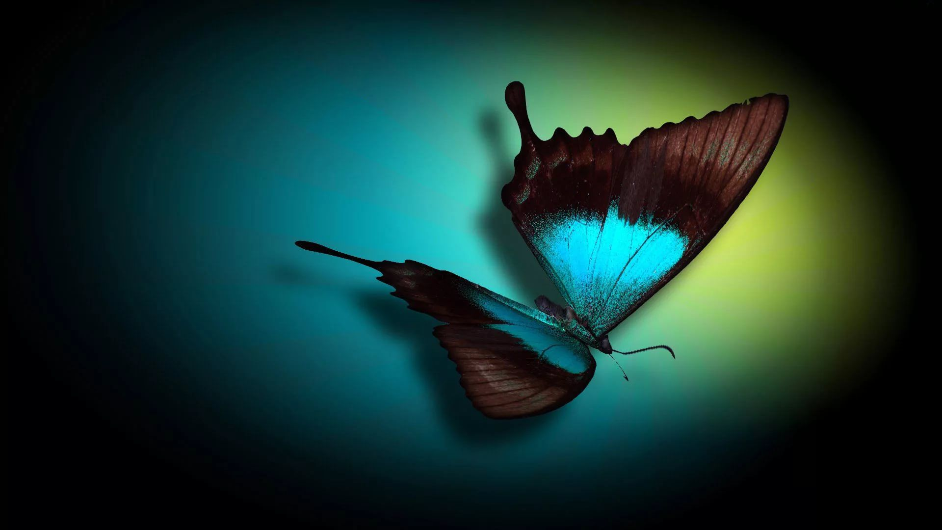 Nice Butterfly Image