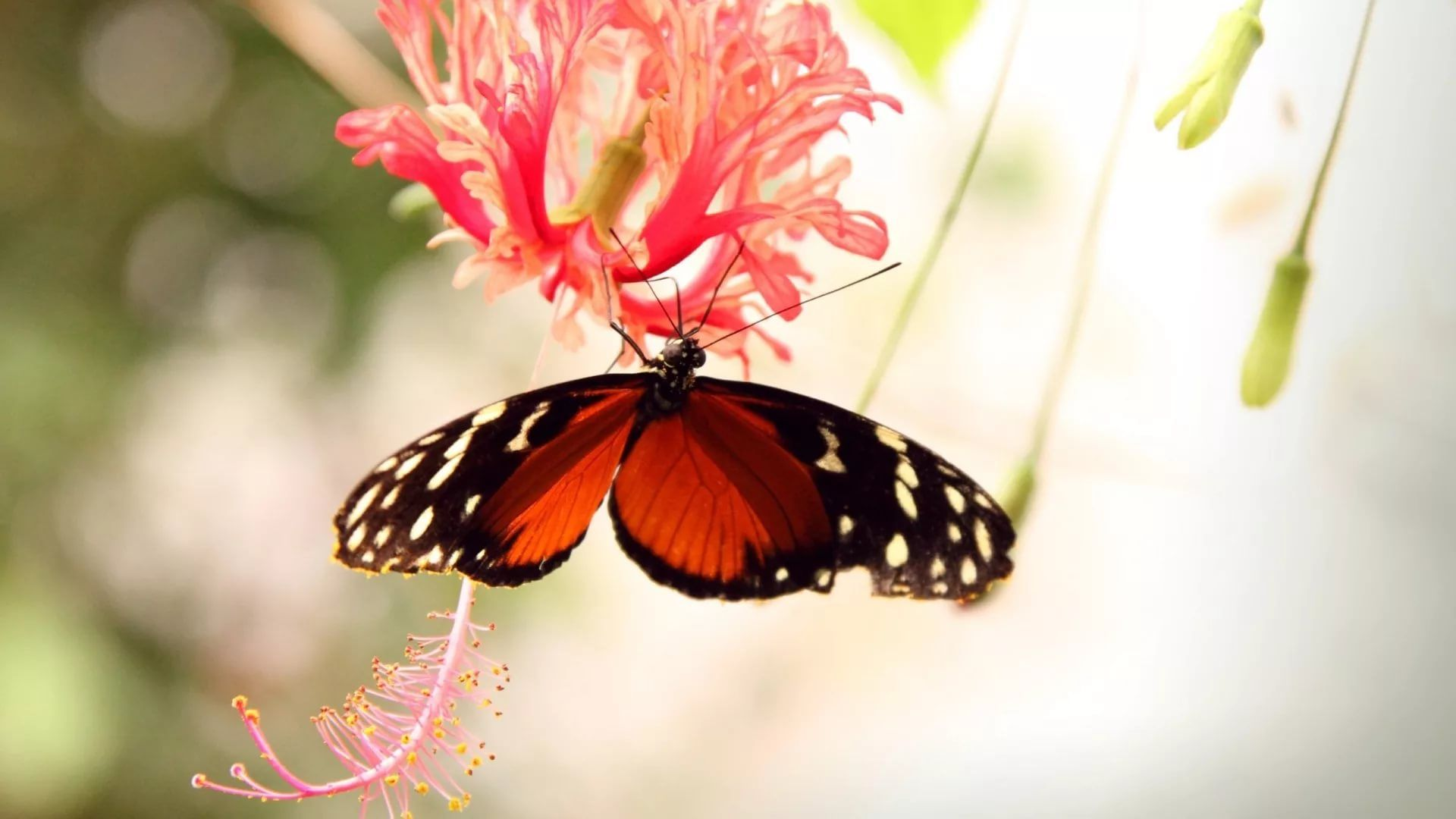 Nice Butterfly background wallpaper