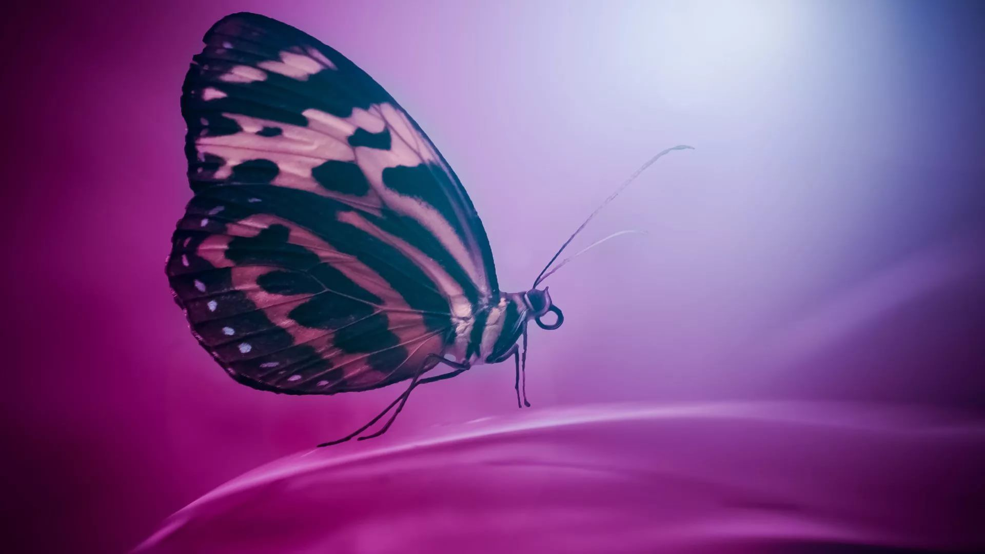 Nice Butterfly HD 1080 wallpaper