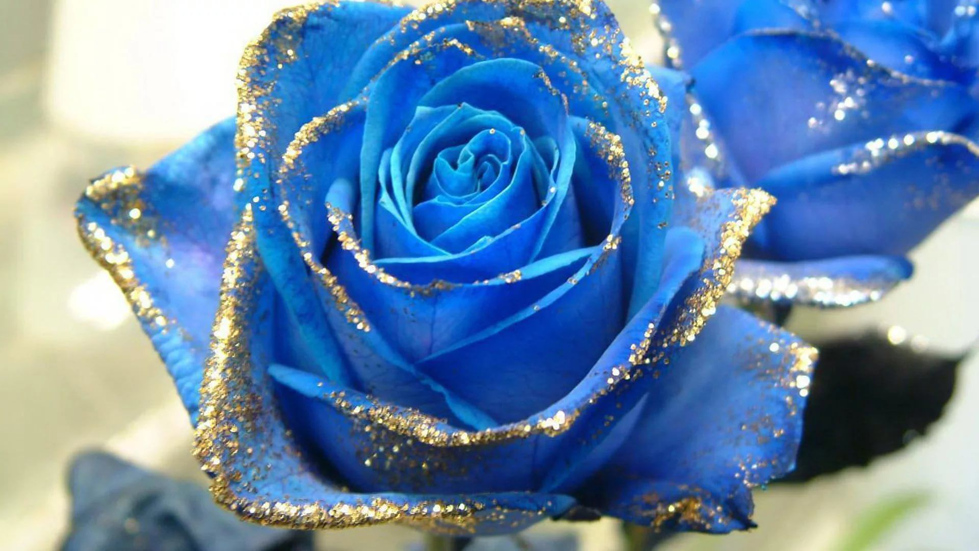 Blue Rose Wallpaper and Background