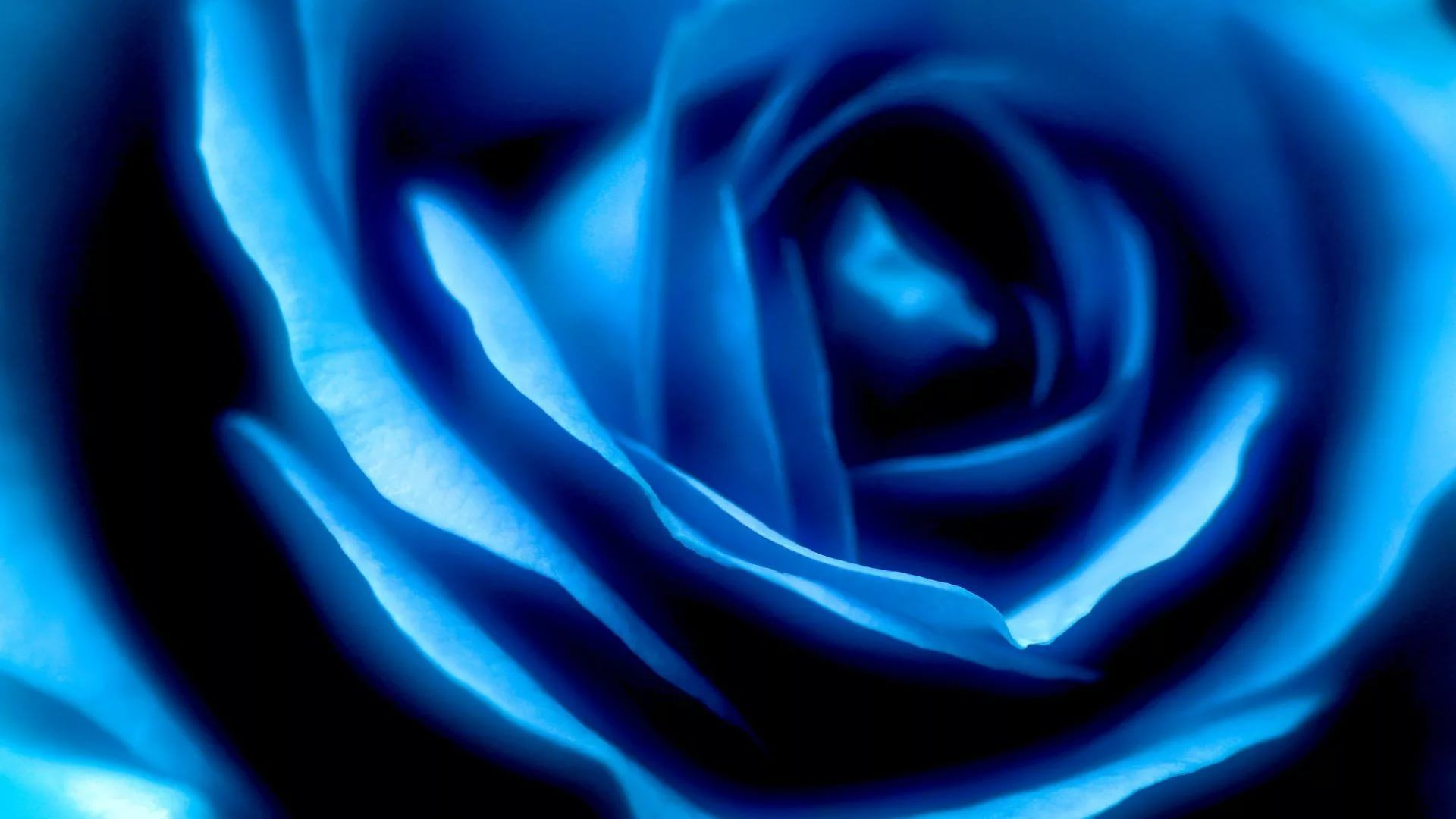 Blue Rose good wallpaper hd