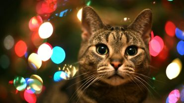 Christmas Cat wallpaper photo hd
