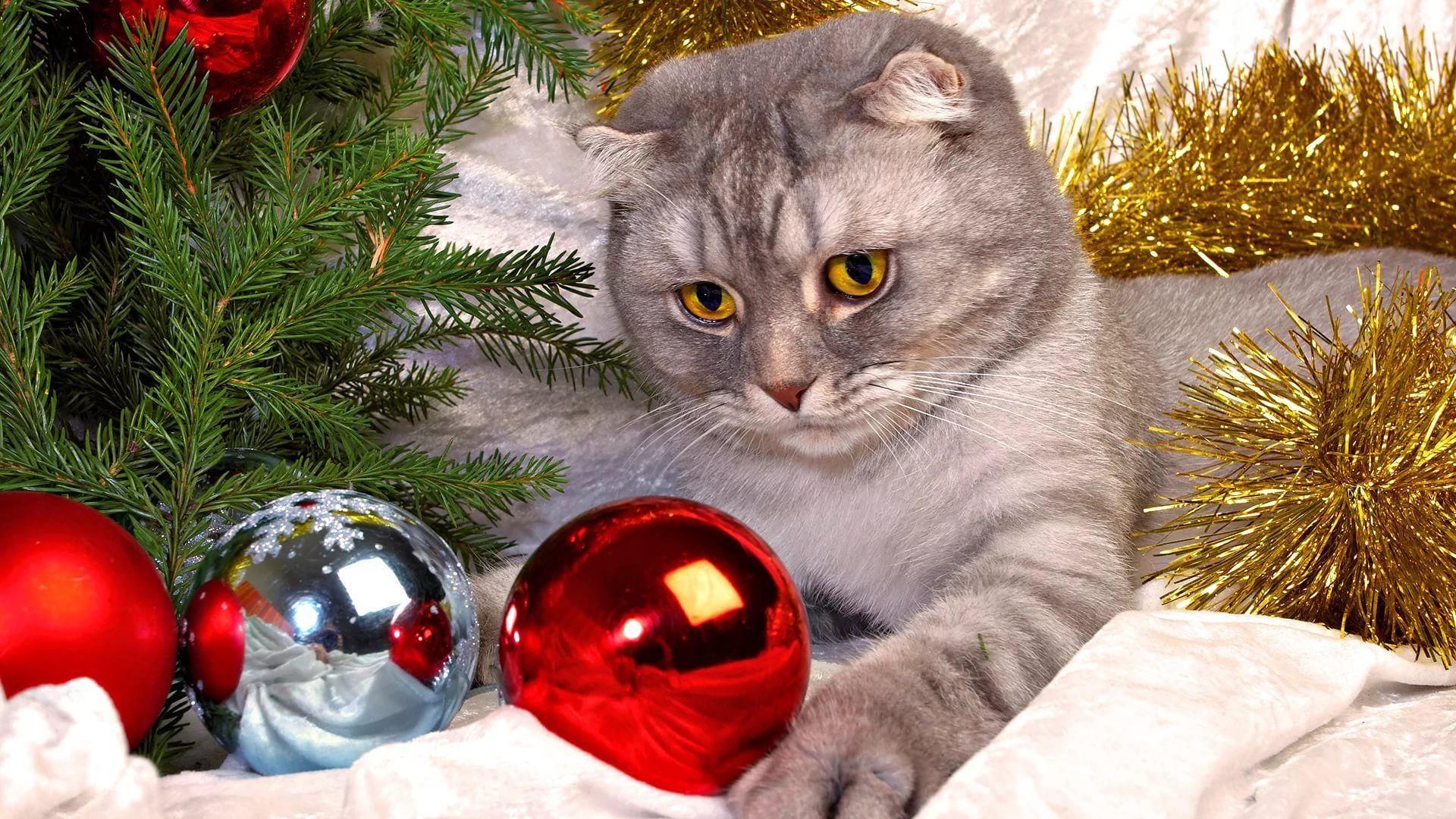 Christmas Cat new wallpaper
