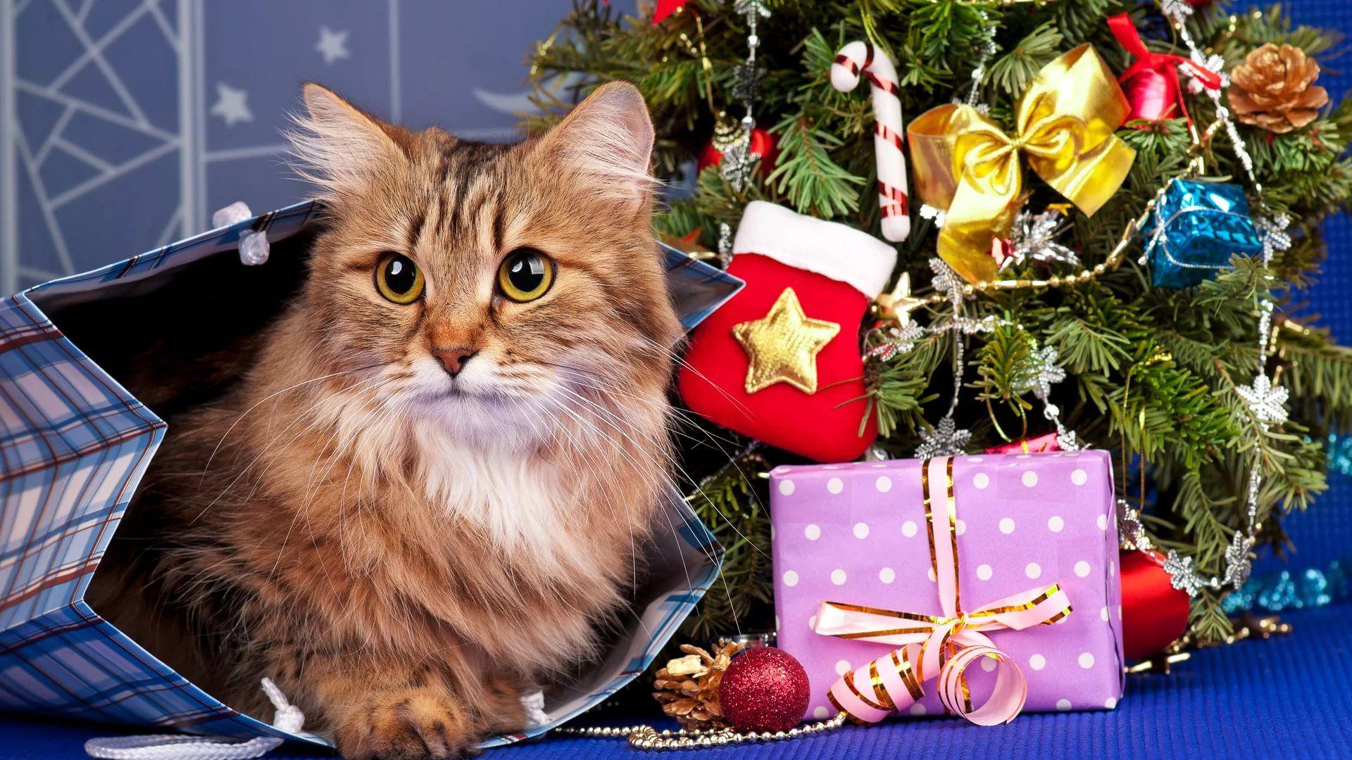 Christmas Cat Free Desktop Wallpaper