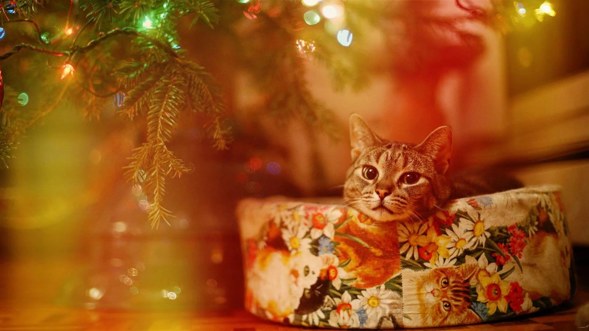 Christmas Cat 1920x1080 wallpaper