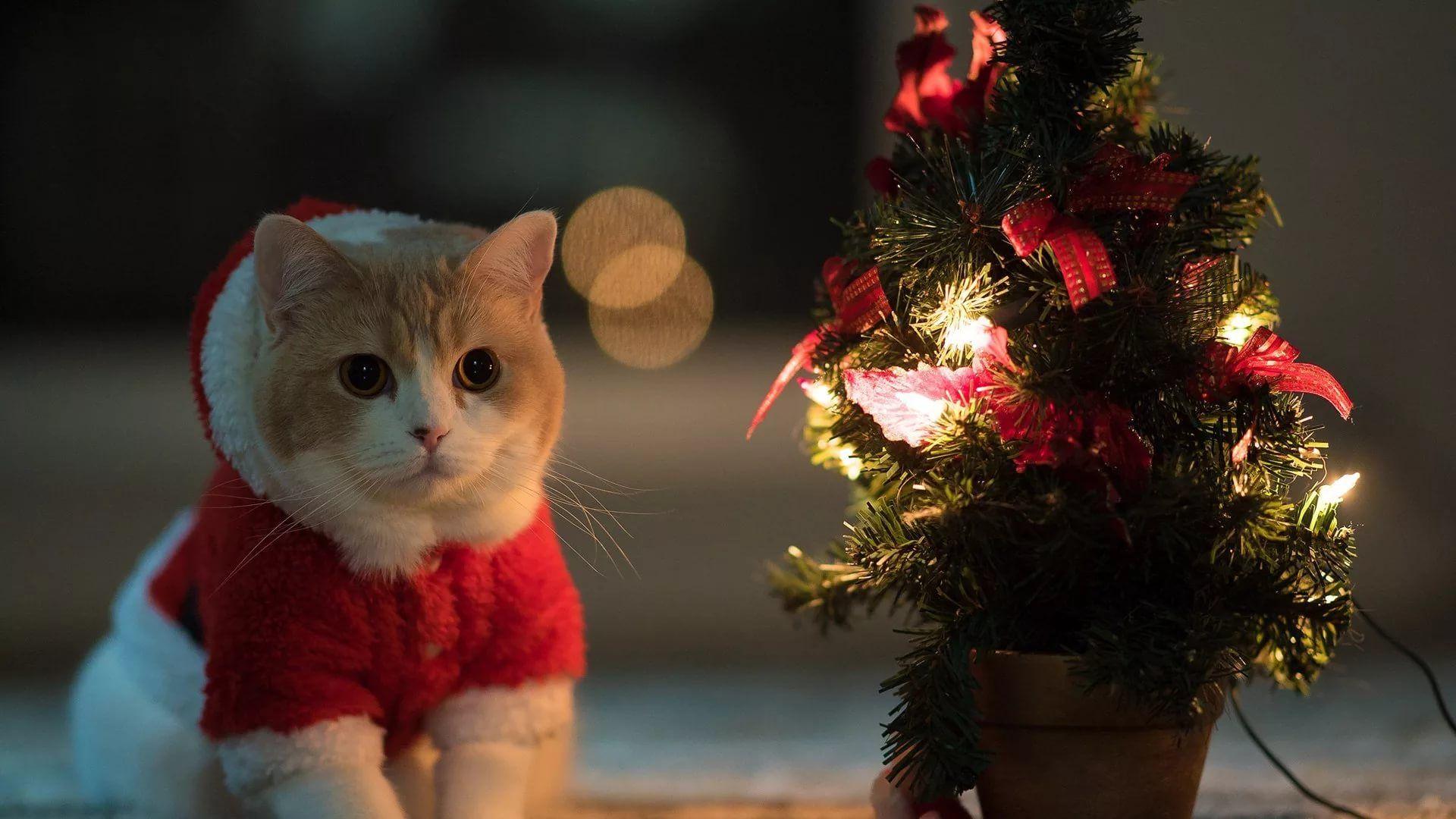 Christmas Cat Background Wallpaper