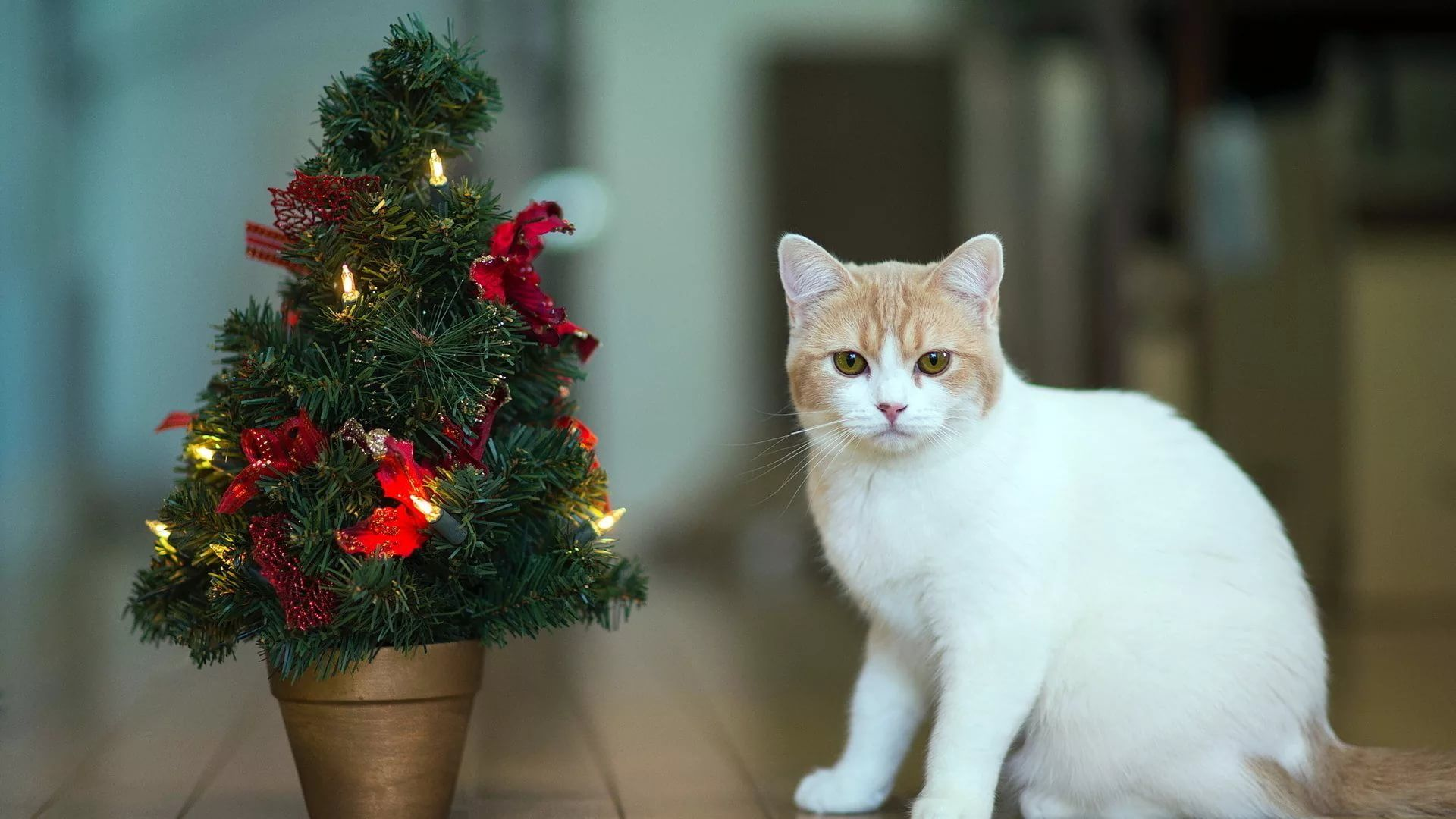 Christmas Cat beautiful wallpaper