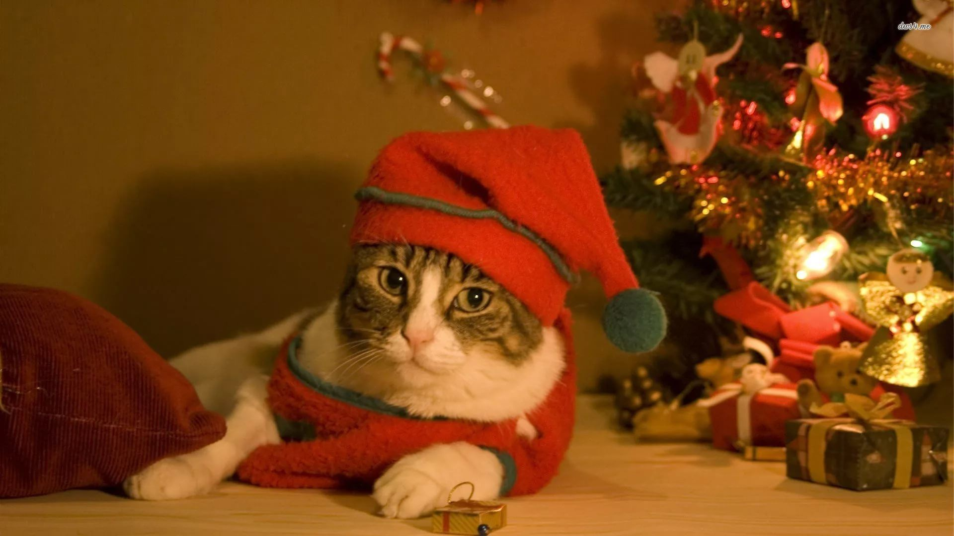 Christmas Cat full wallpaper